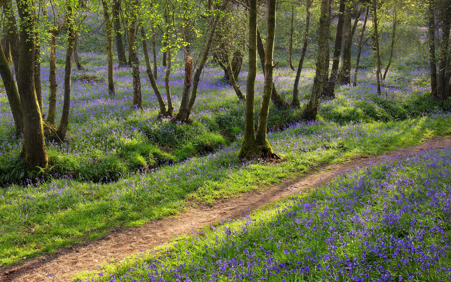 фотообои поздняя весна лес фотографией этой транспортной