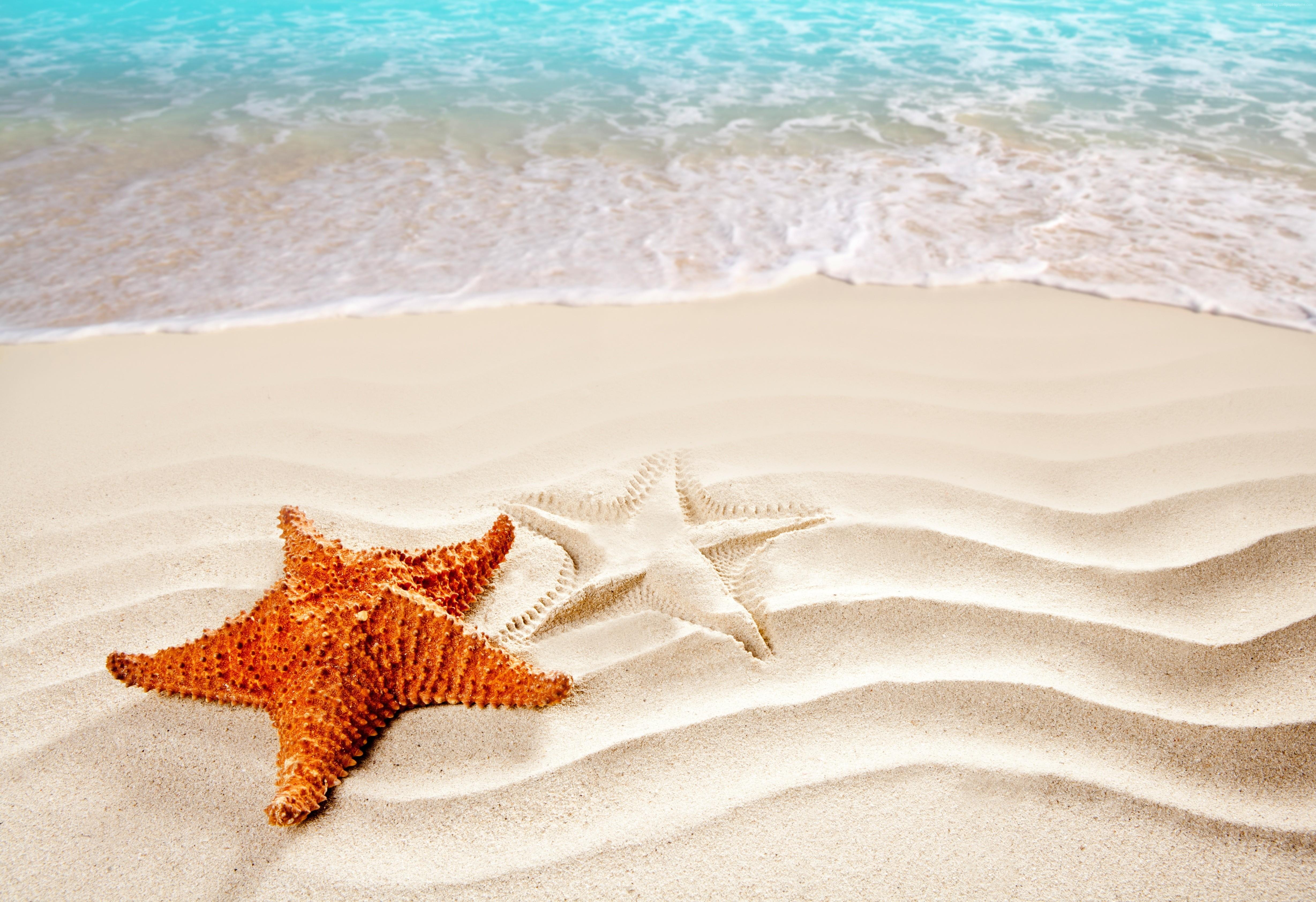 фотообои море пляж морская звезда каркасной