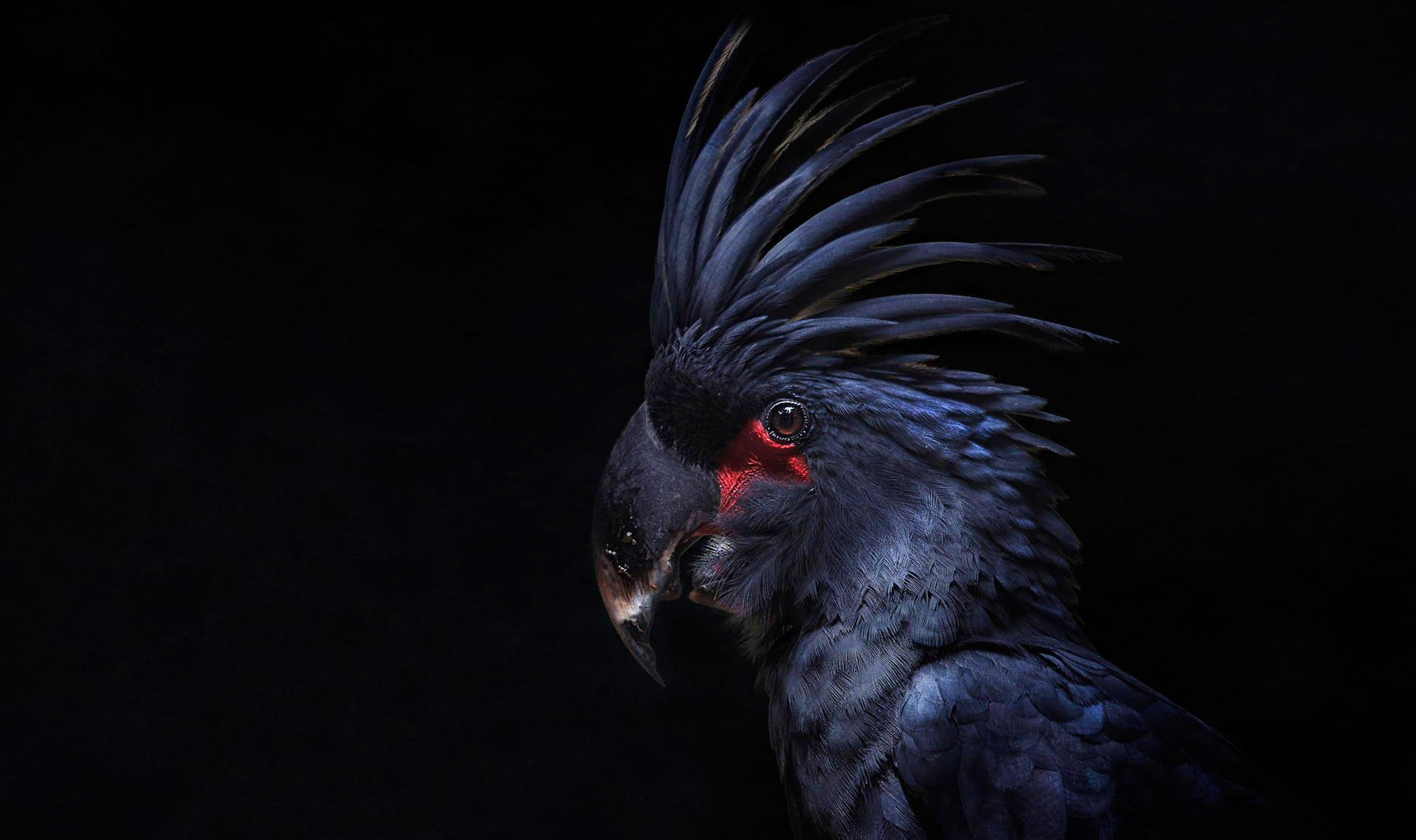 его фото птиц на черном фоне автомобиль