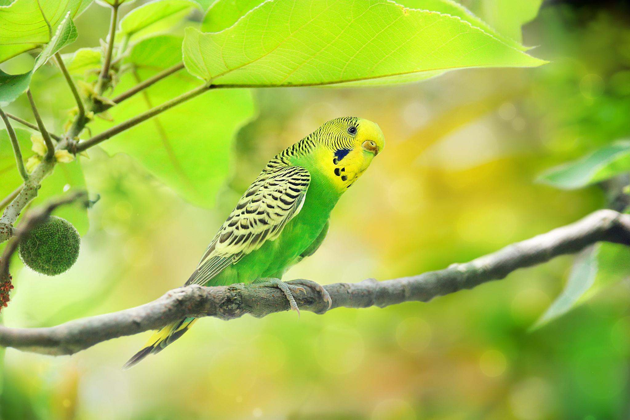 попугай на ветке скачать