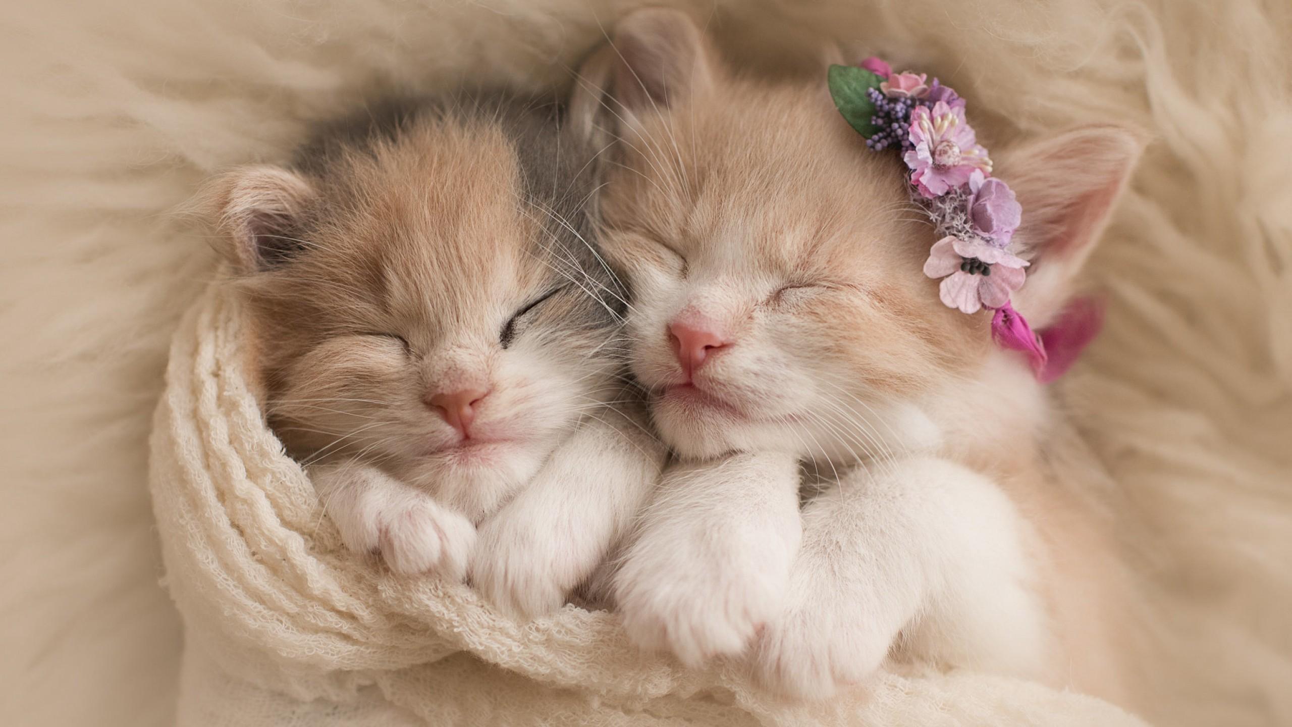 котенком милые фото с
