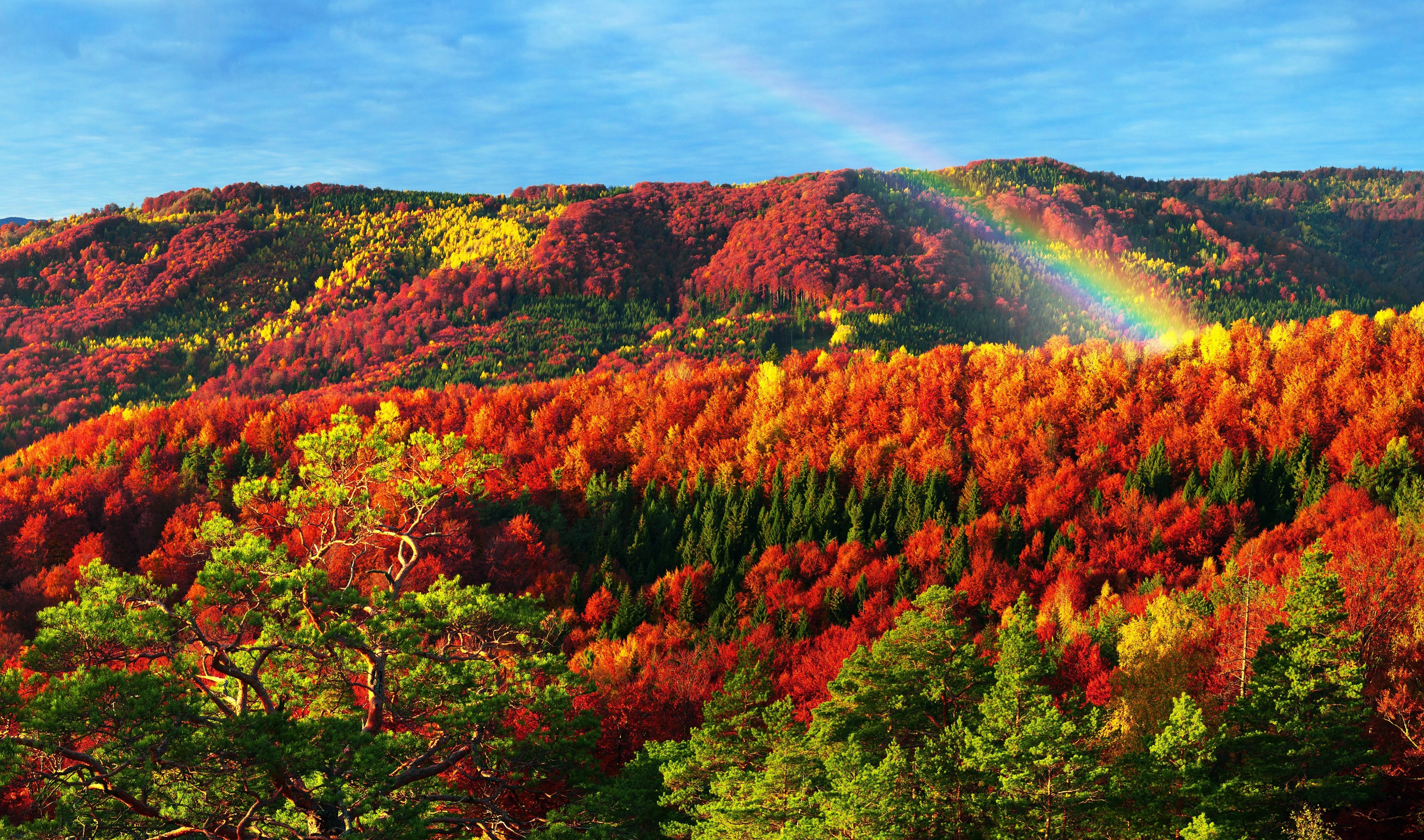 грамотный доктор красота осеннего леса фото правильно