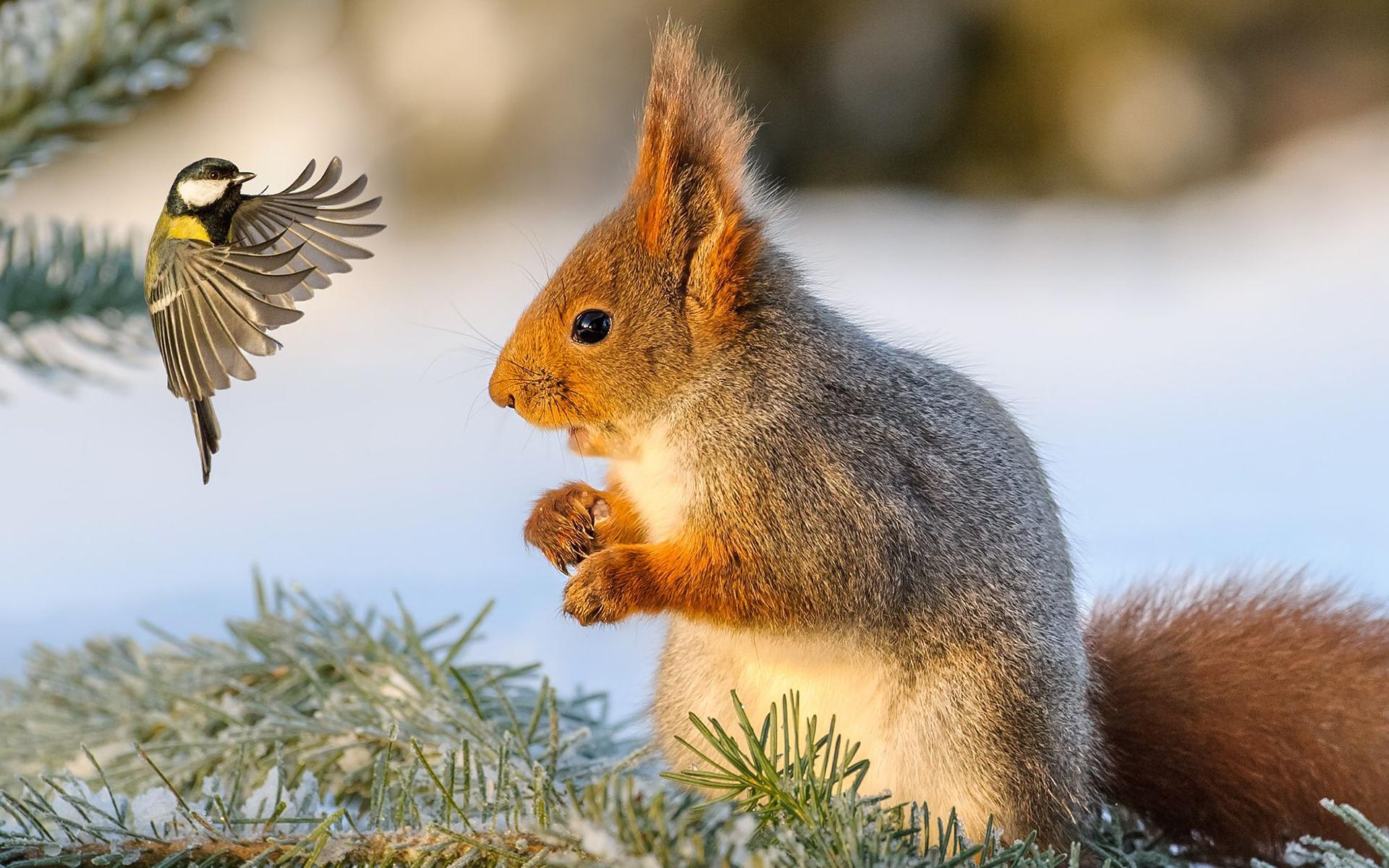 что фото птиц и животных зимой обеде честь
