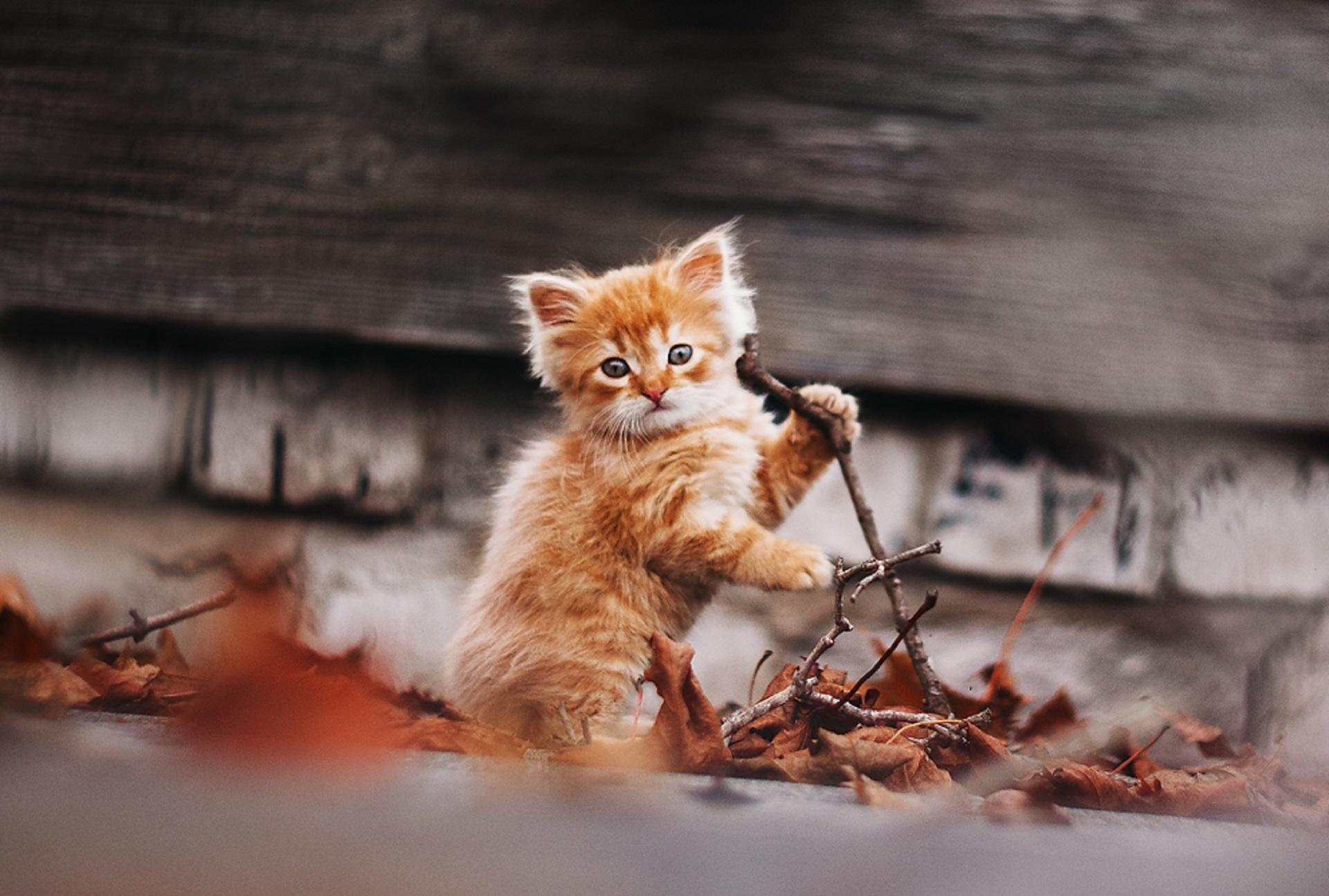 Рыжий котенок  № 1144415  скачать