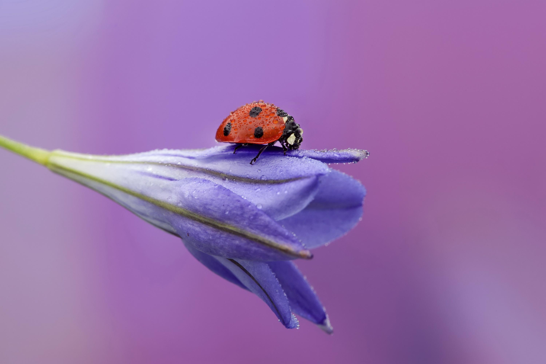 природа цветы роса загрузить