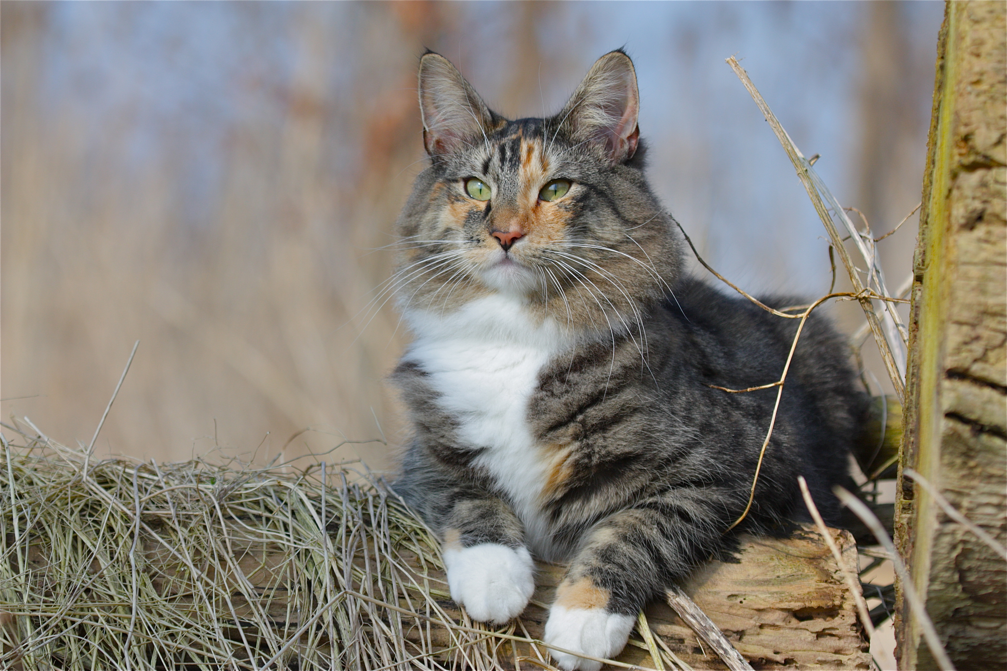 how to get rid of cat urine smell on clothes