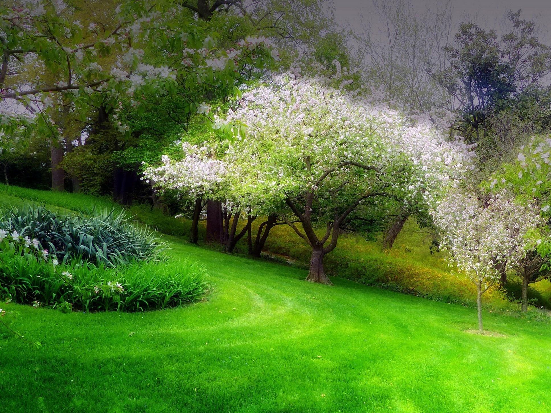 природа трава река цветы деревья парк nature grass river flowers trees Park скачать