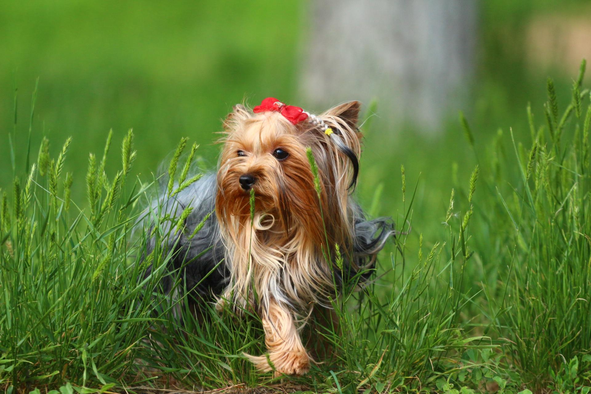 Собака обижака картинка необходимый заслуженно
