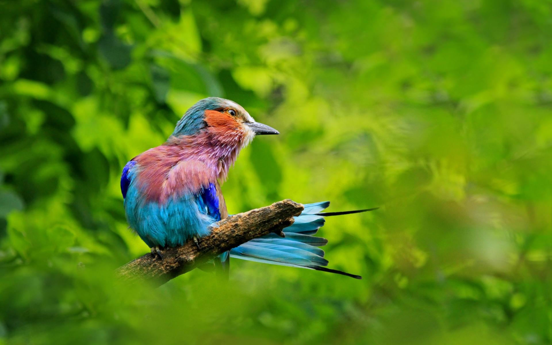 птичка ветка зелень bird branch greens бесплатно