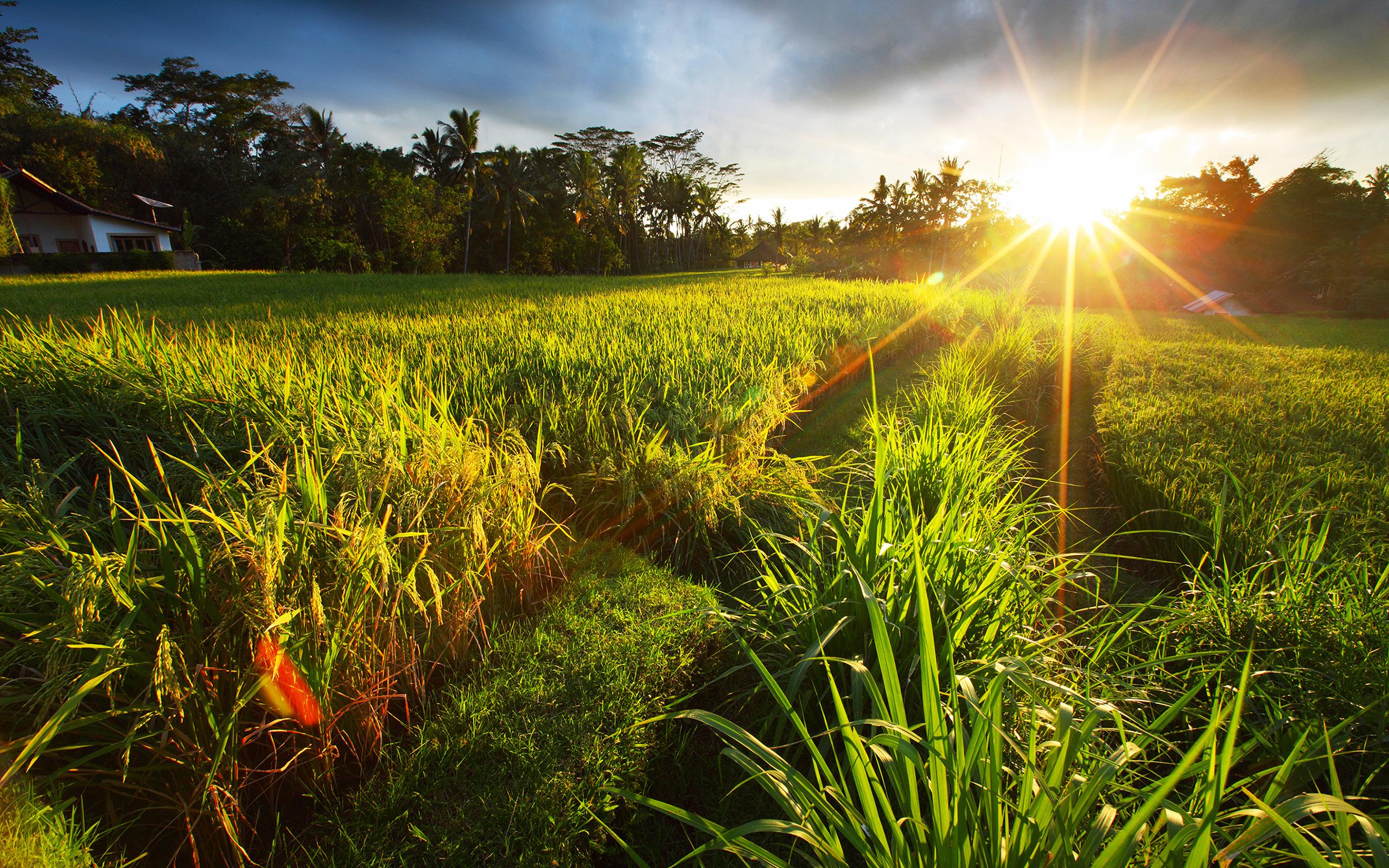 картинка утро трава природа способ отправки