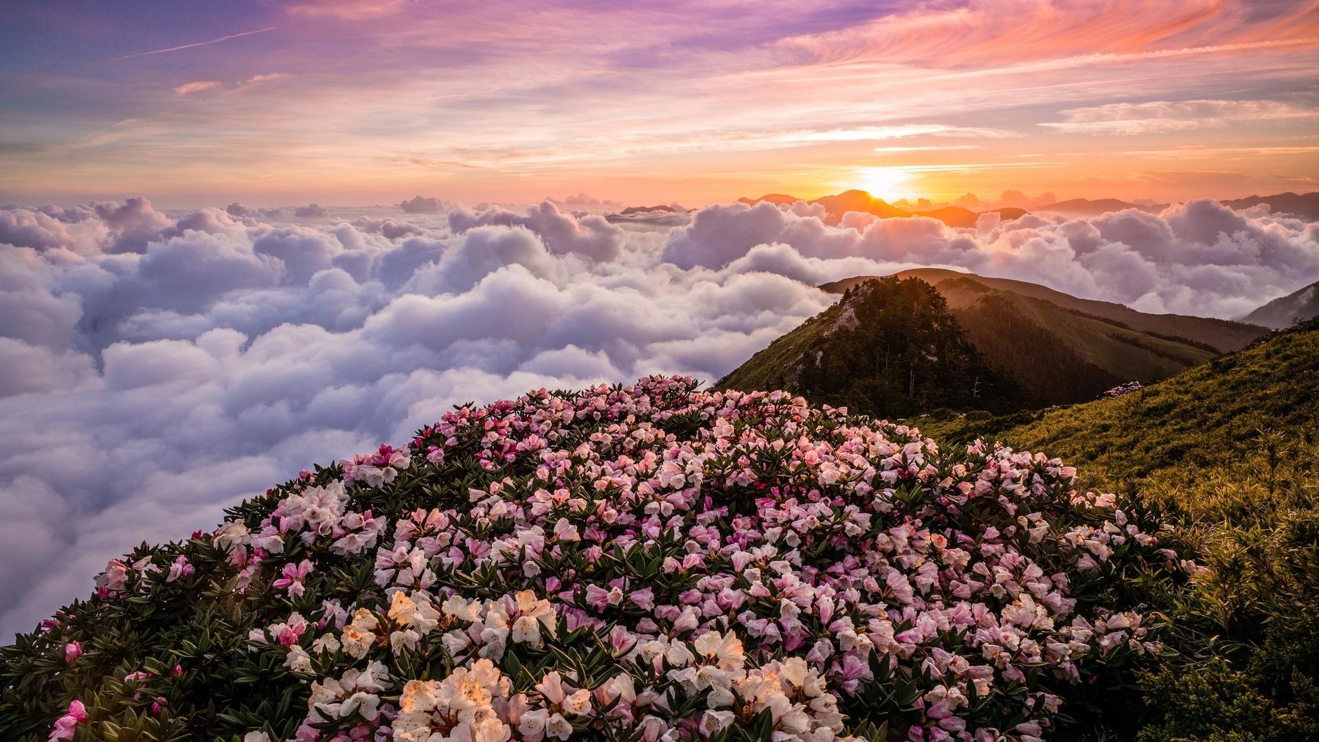 цветущие горы картинка продолжает свои поиски