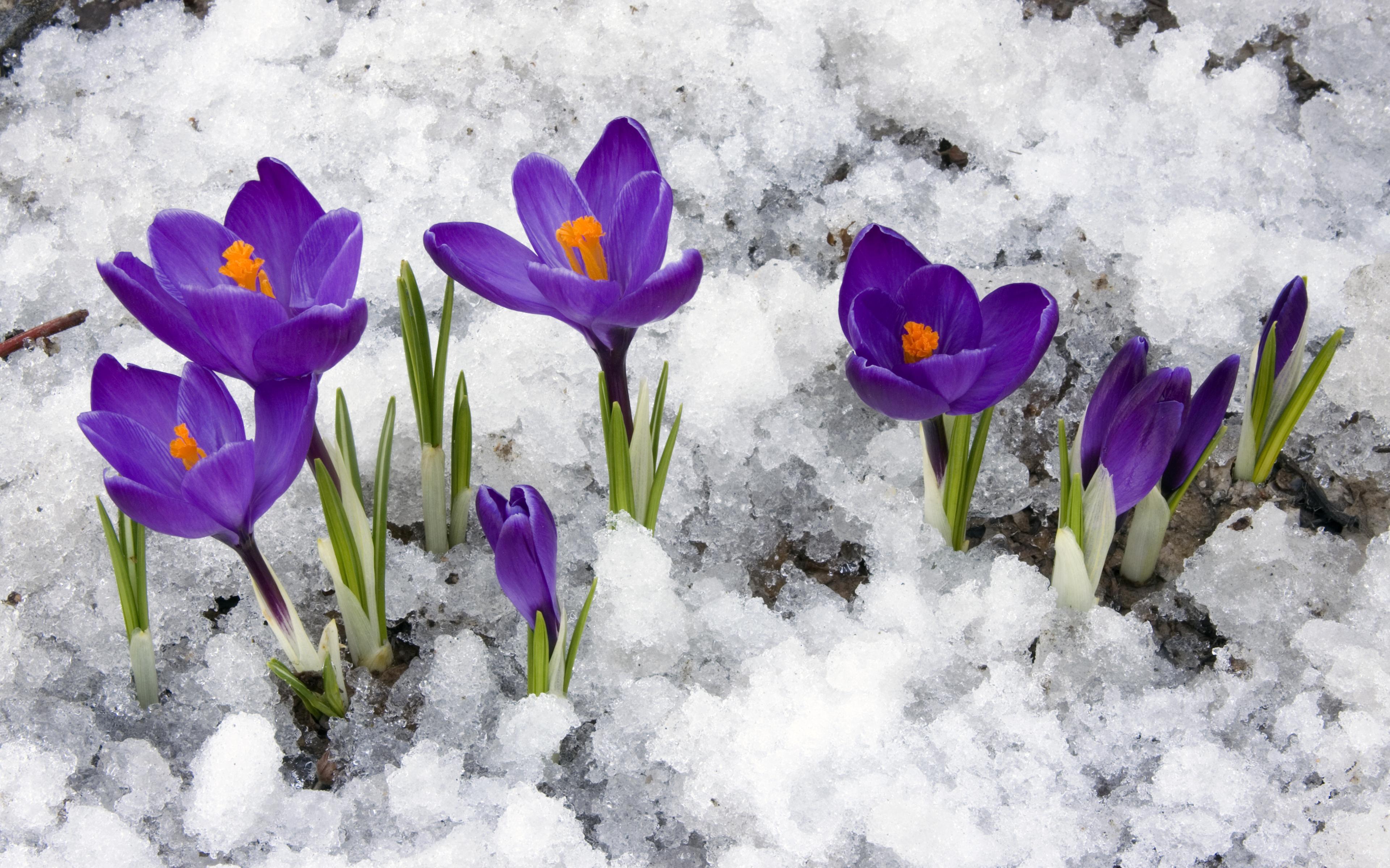 Фото весна открытки