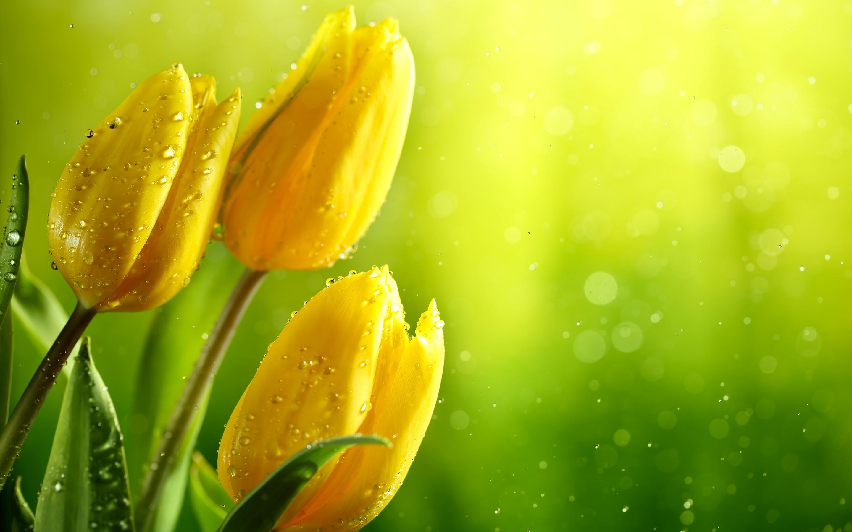 Картинки цветы желто-зеленые