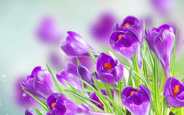 День, красивые цветы открытки весенние