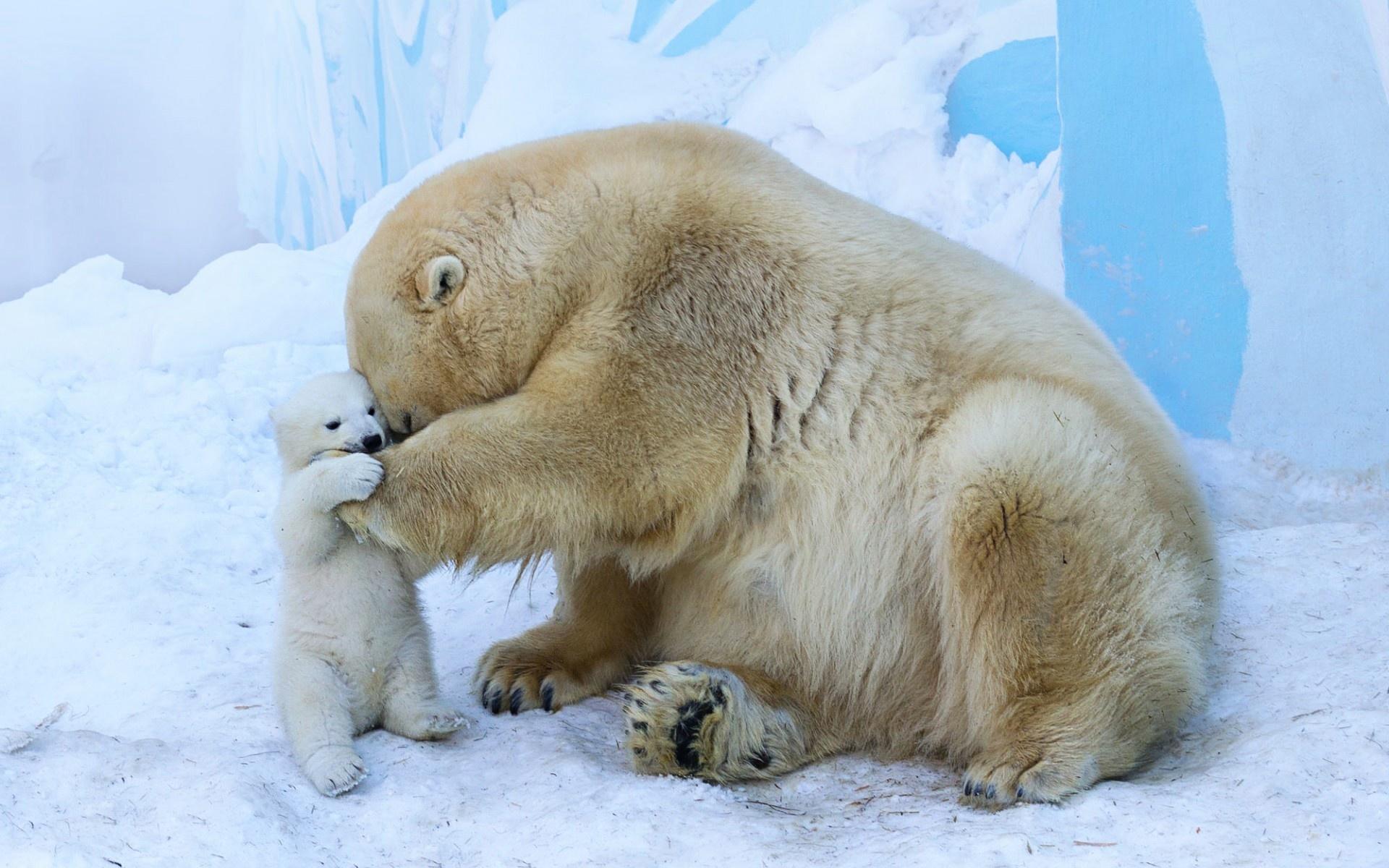 ванну, установить я люблю белых медведей процентов делаете