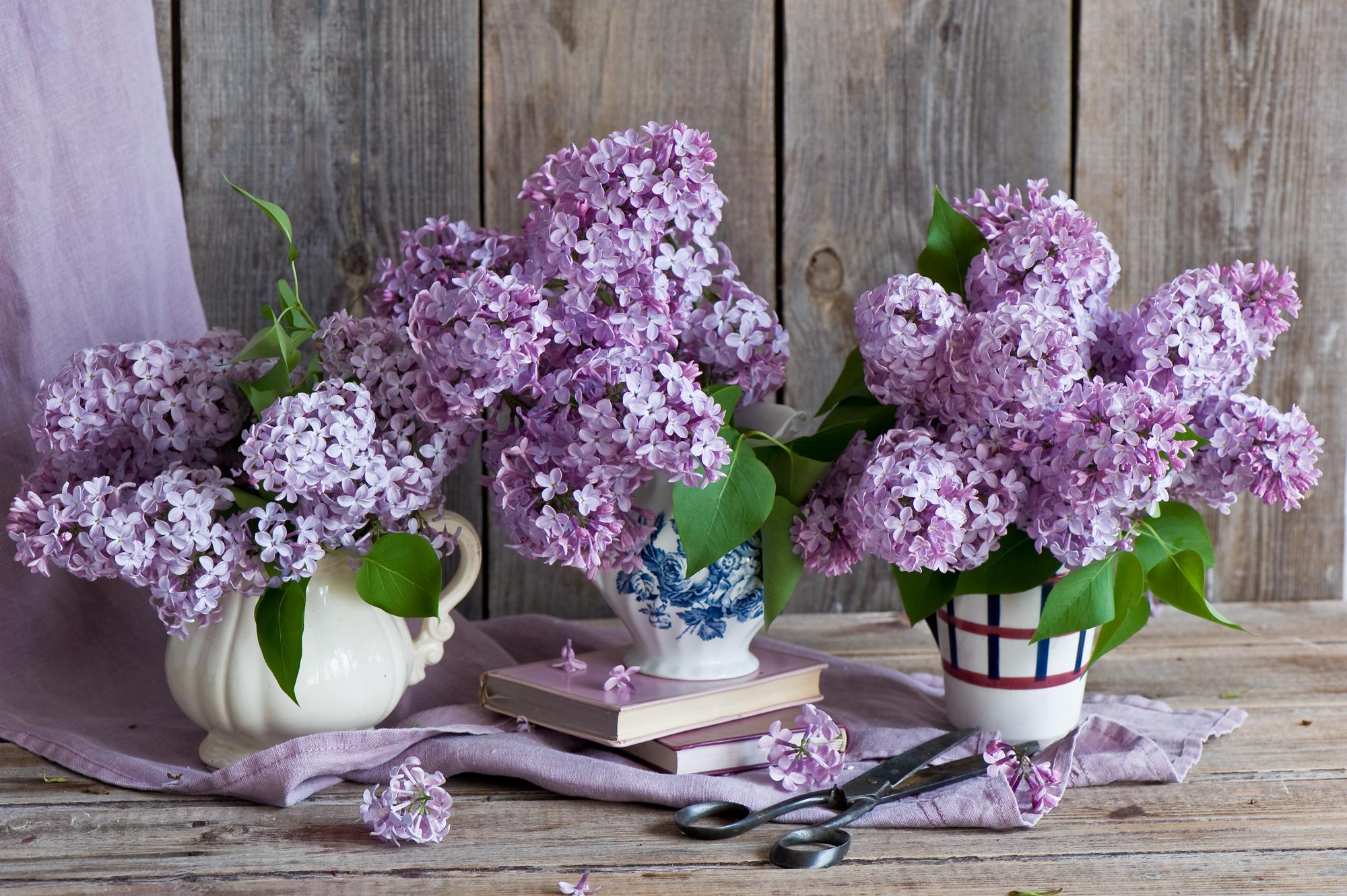 Букет сирени сиреневый, цветы