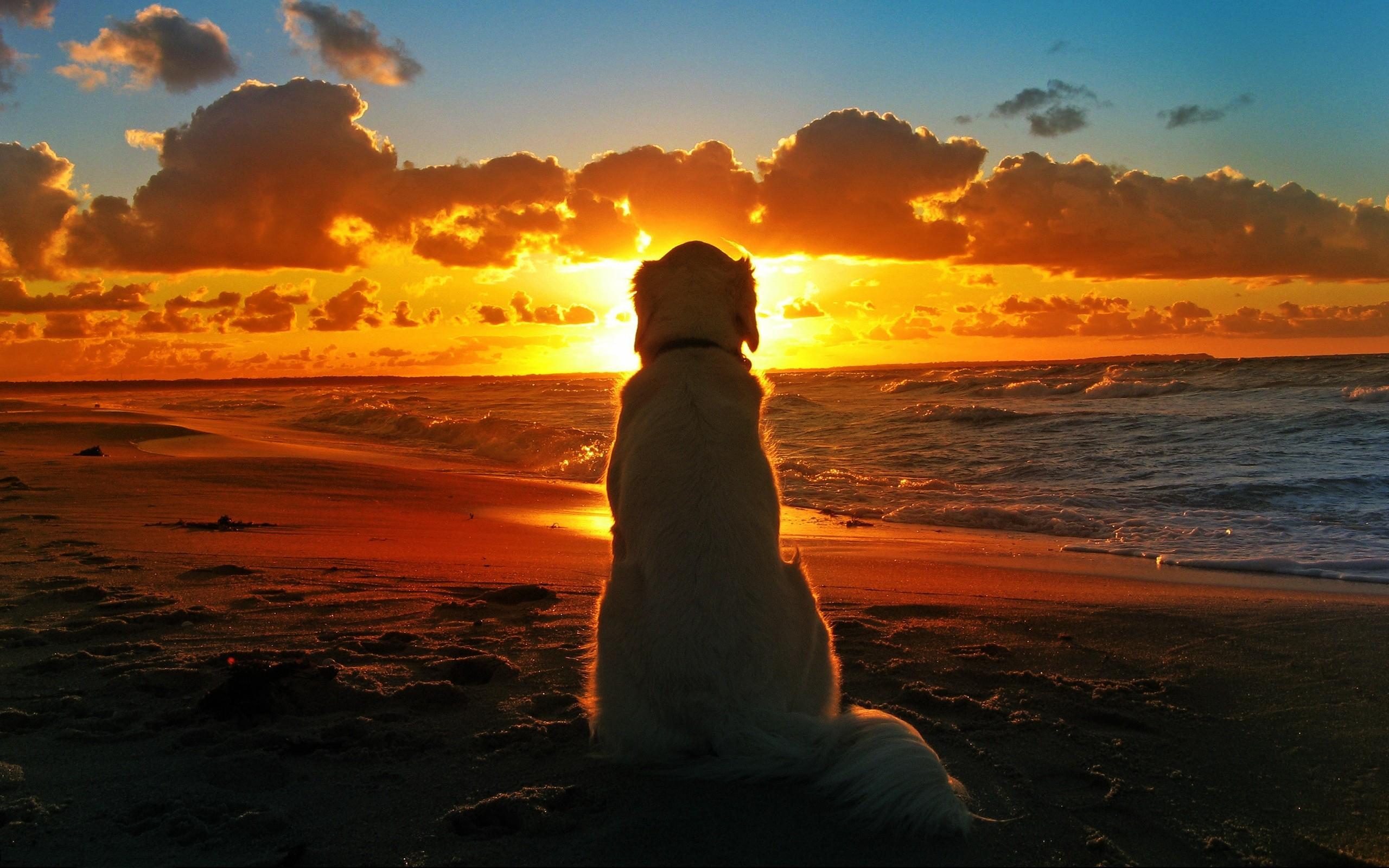 Восход солнца веселые картинки