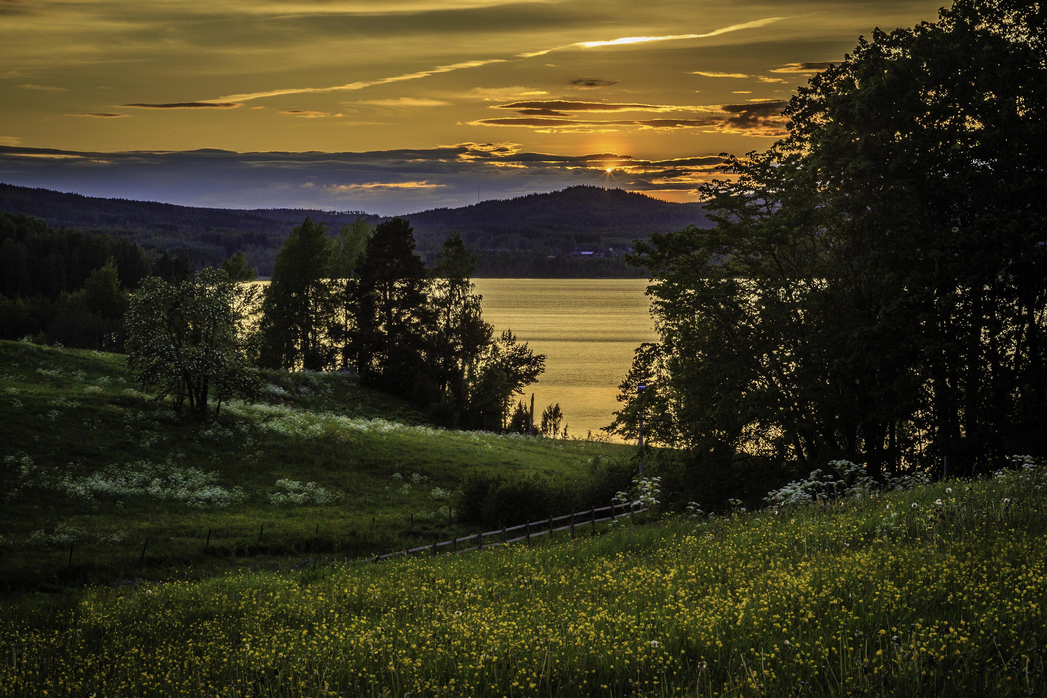 закат трава цветы озеро  № 1025285 бесплатно