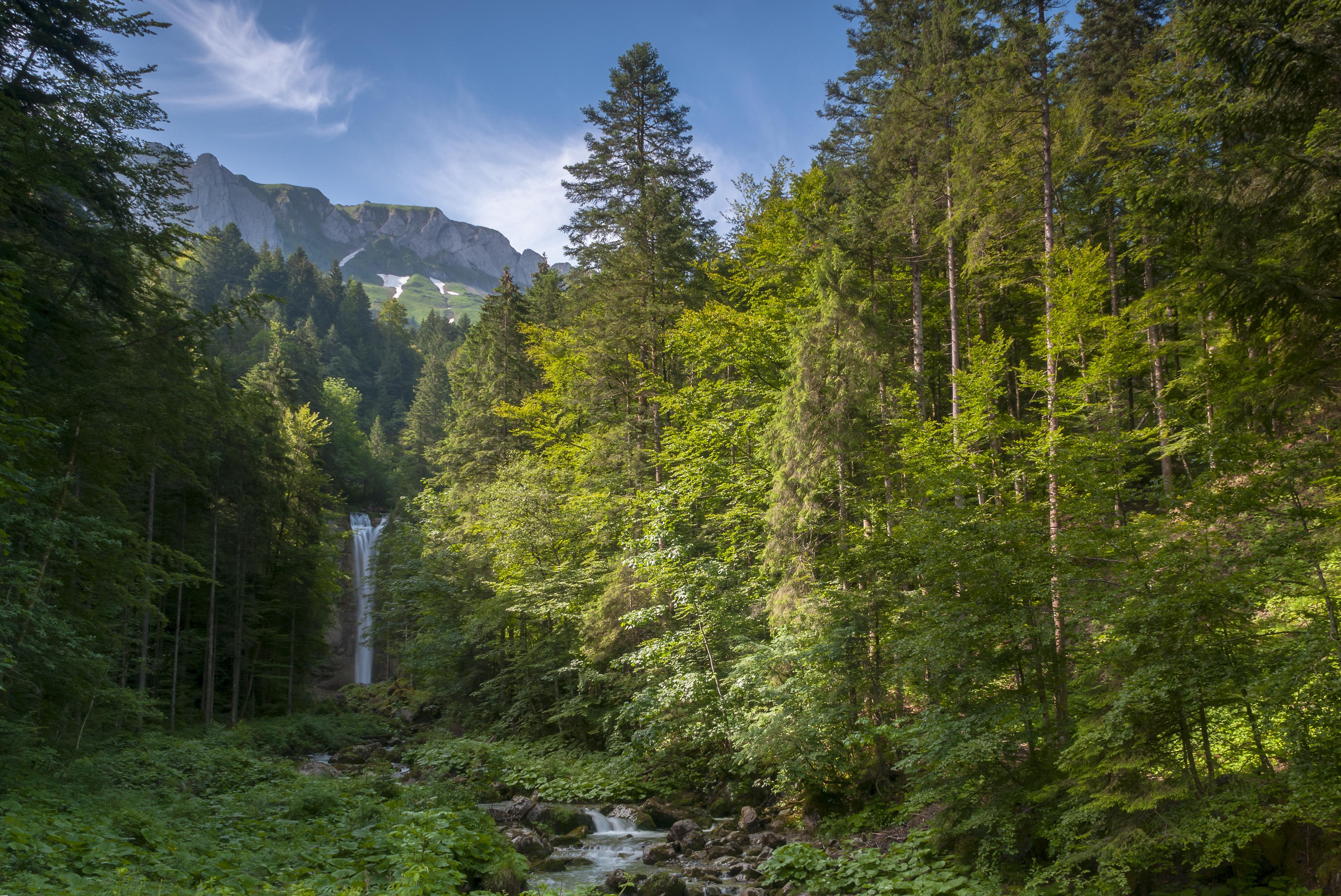 Швейцария Горы река деревья трава  № 183940  скачать
