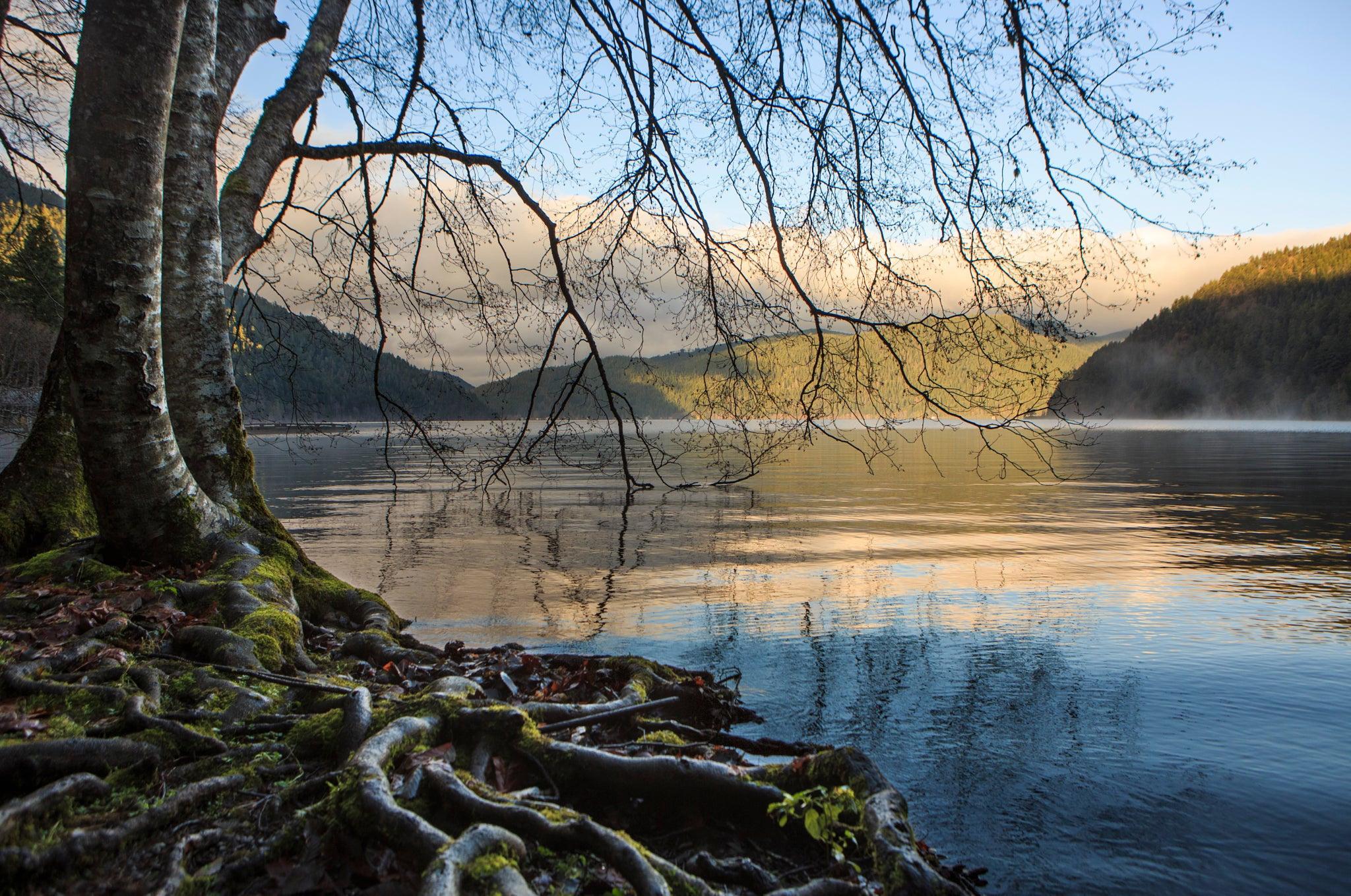 горы озеро деревья корни mountains the lake trees roots бесплатно