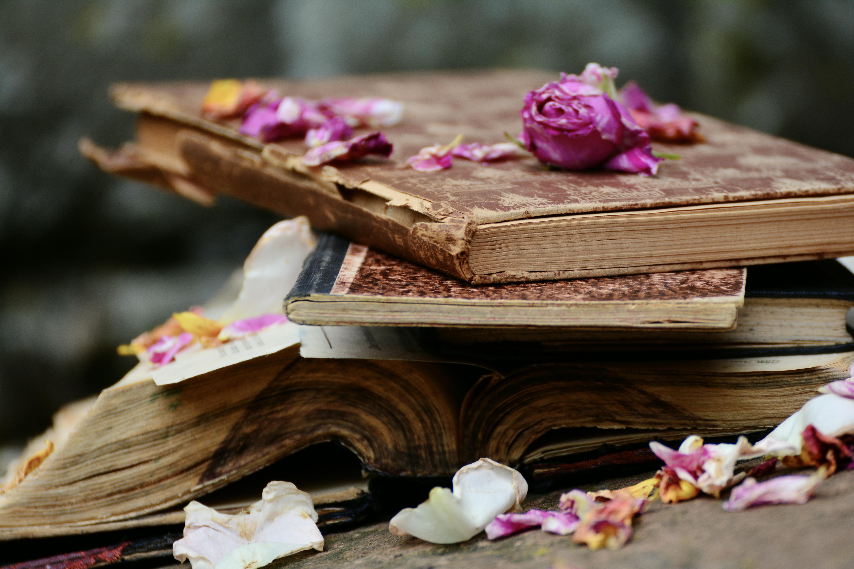 по-настоящему книги красивые фотографии осмелюсь утверждать, что