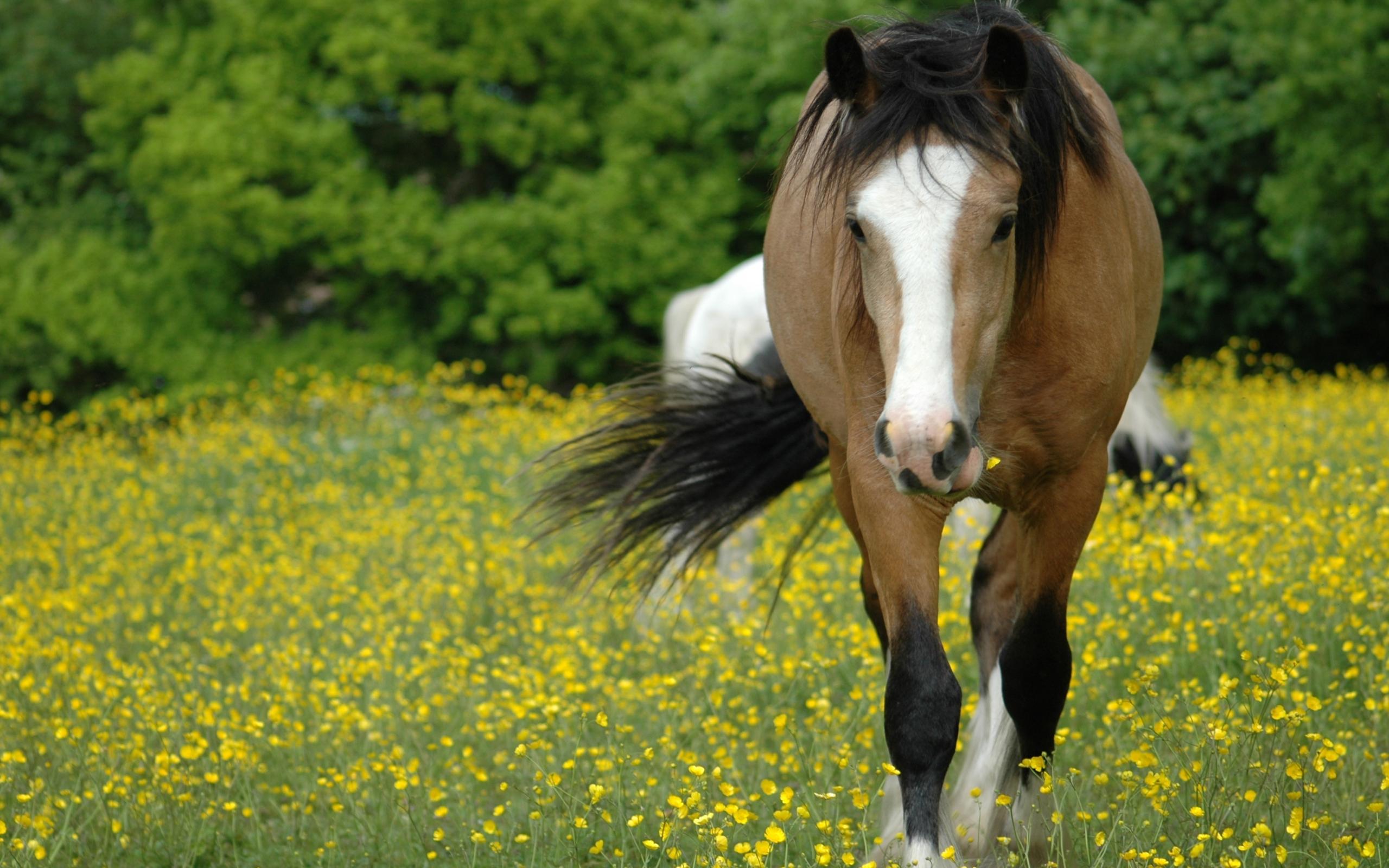 Лошадь в цветах  № 3117267 загрузить
