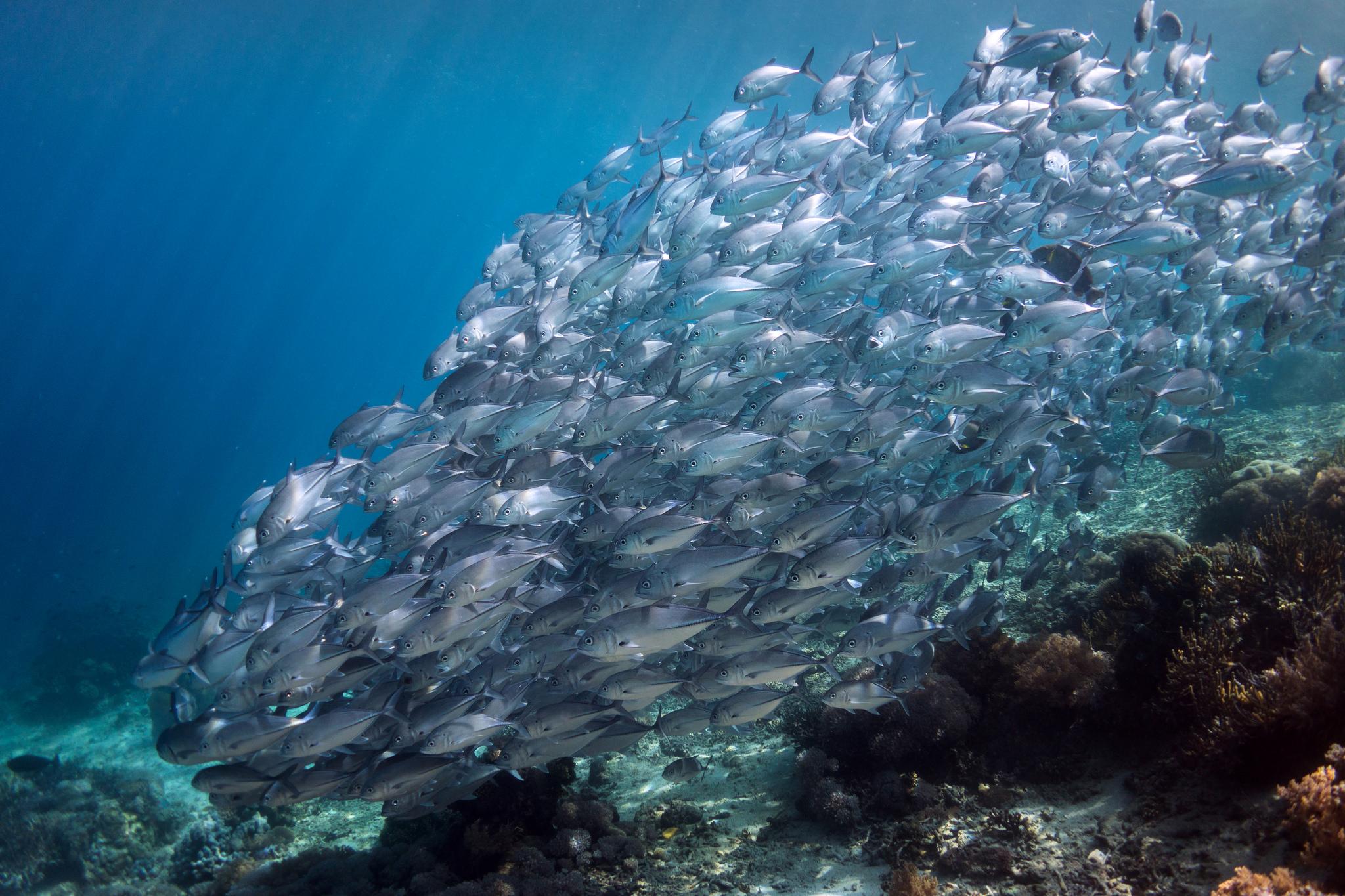 героини, рыбы атлантического океана фото психиатрическая служба