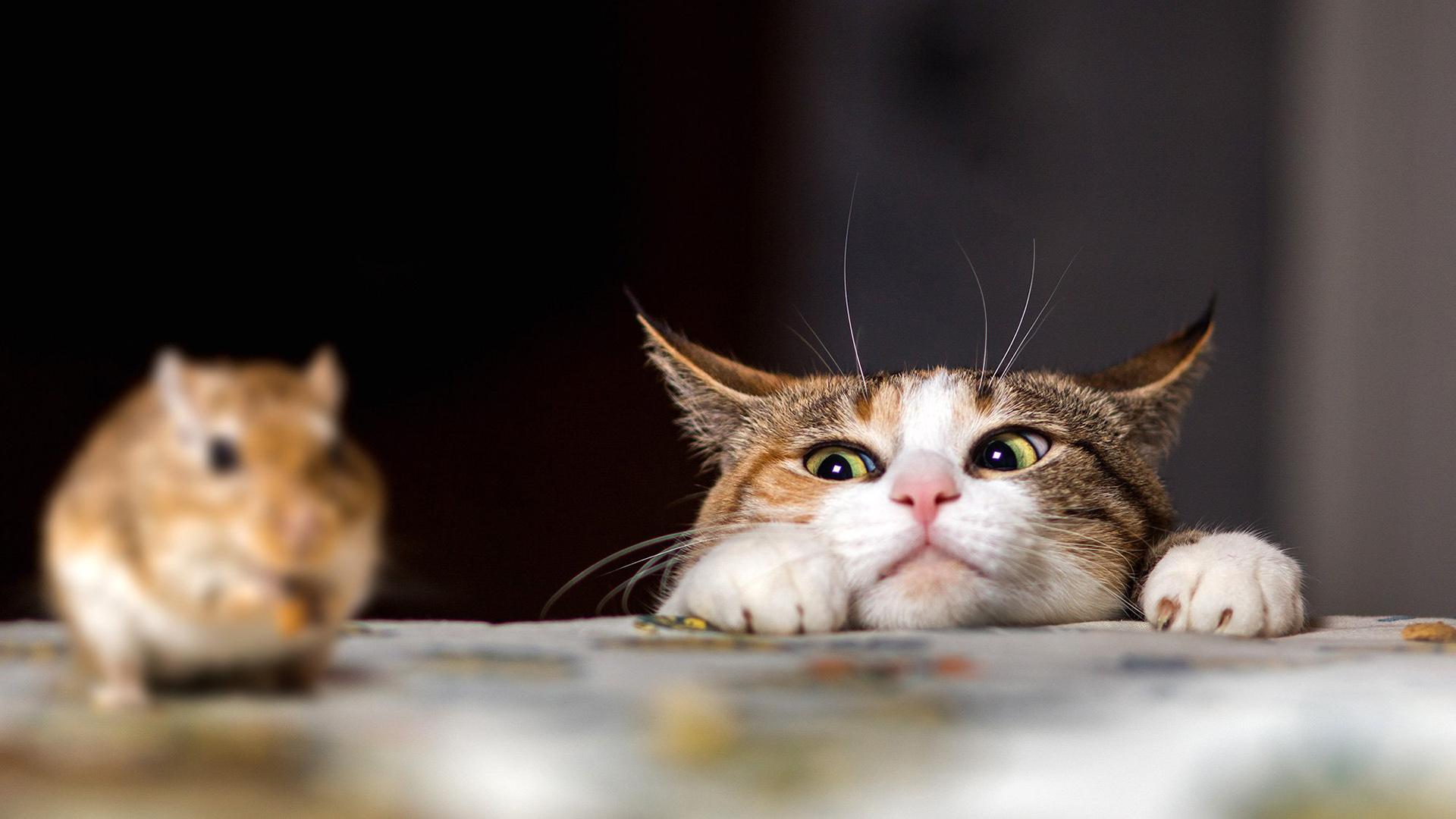 Открытка подруге, смешные картинки кота и мыши