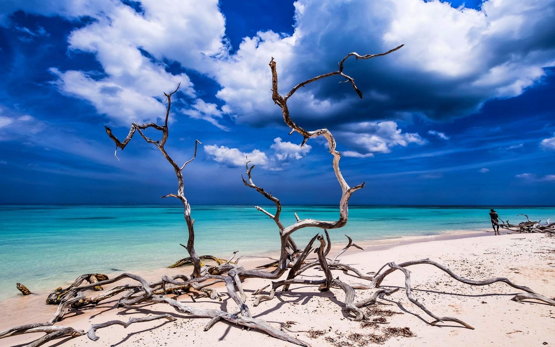 Море вода деревья облака  № 1034923 бесплатно