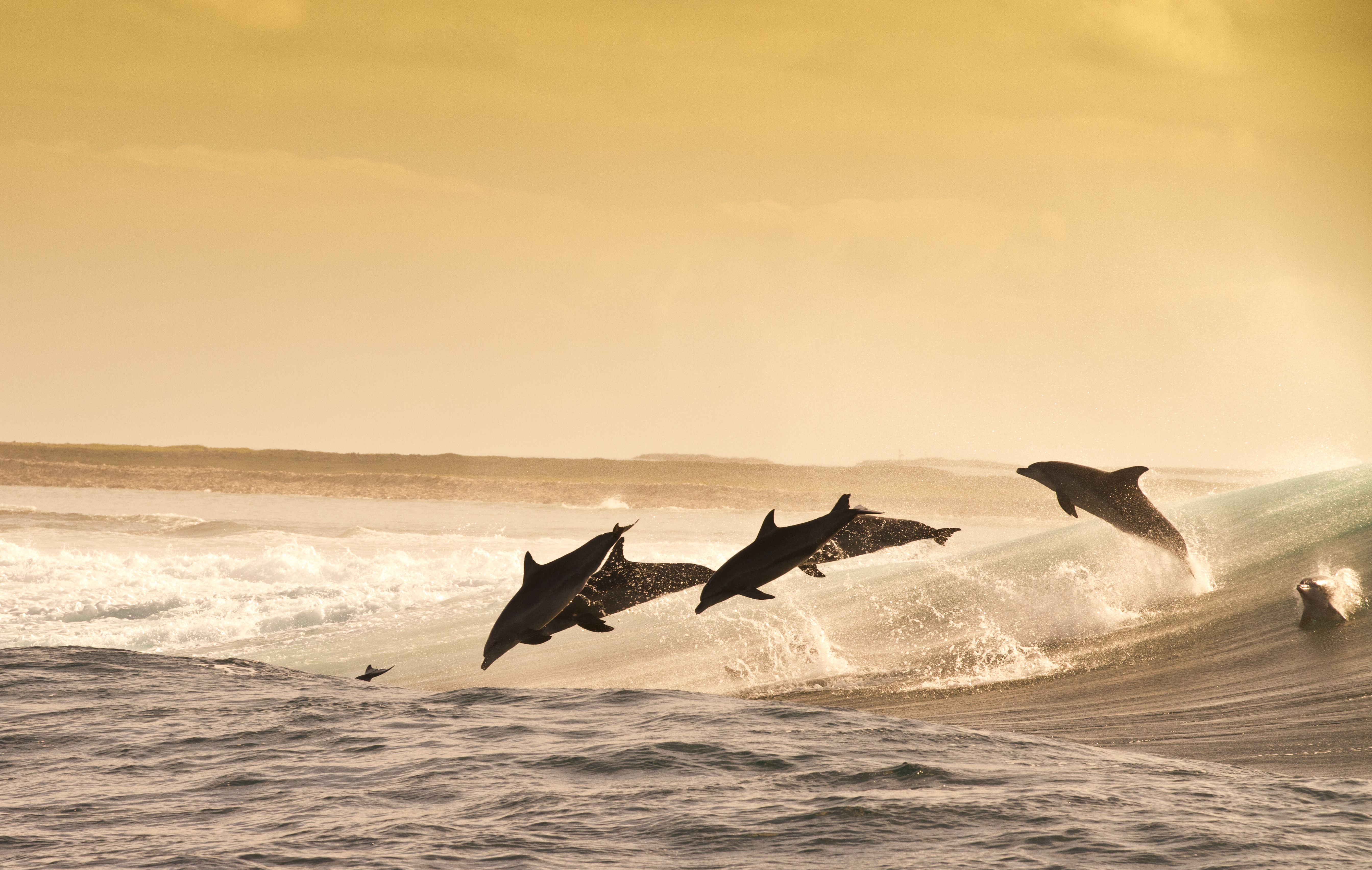 Дельфин прыжок волна бесплатно