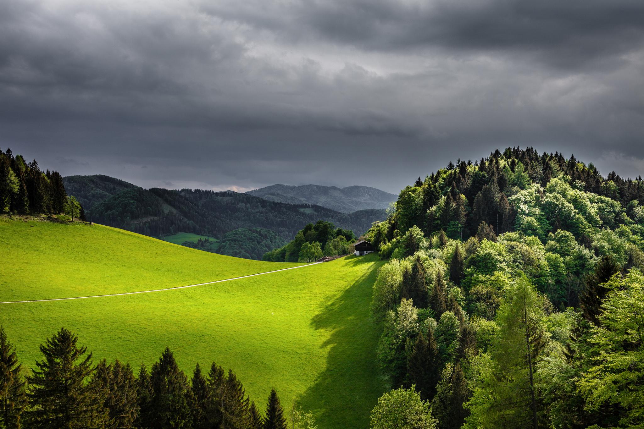 поле лес field forest скачать