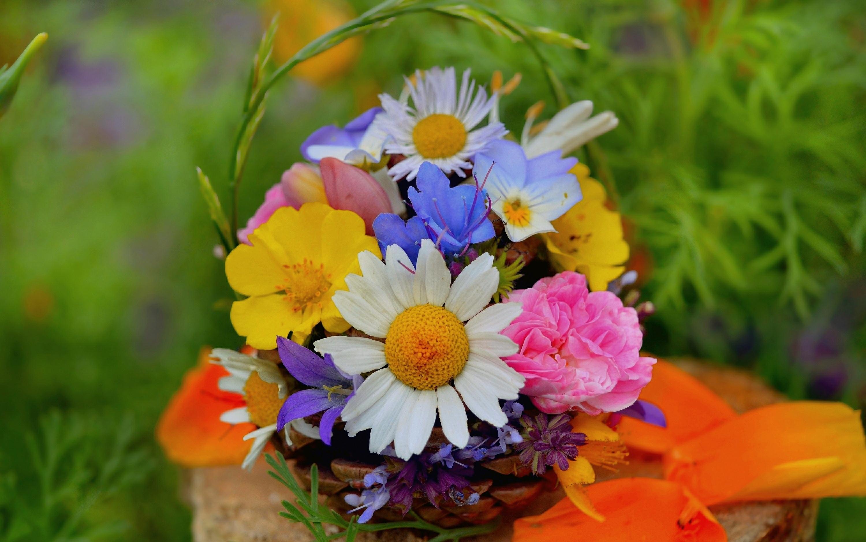 Полевые цветы фото букеты красивые фото, подарков