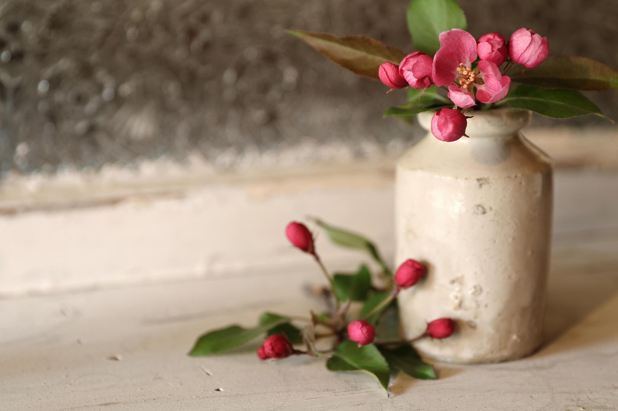природа цветы ваза  № 1734233 без смс