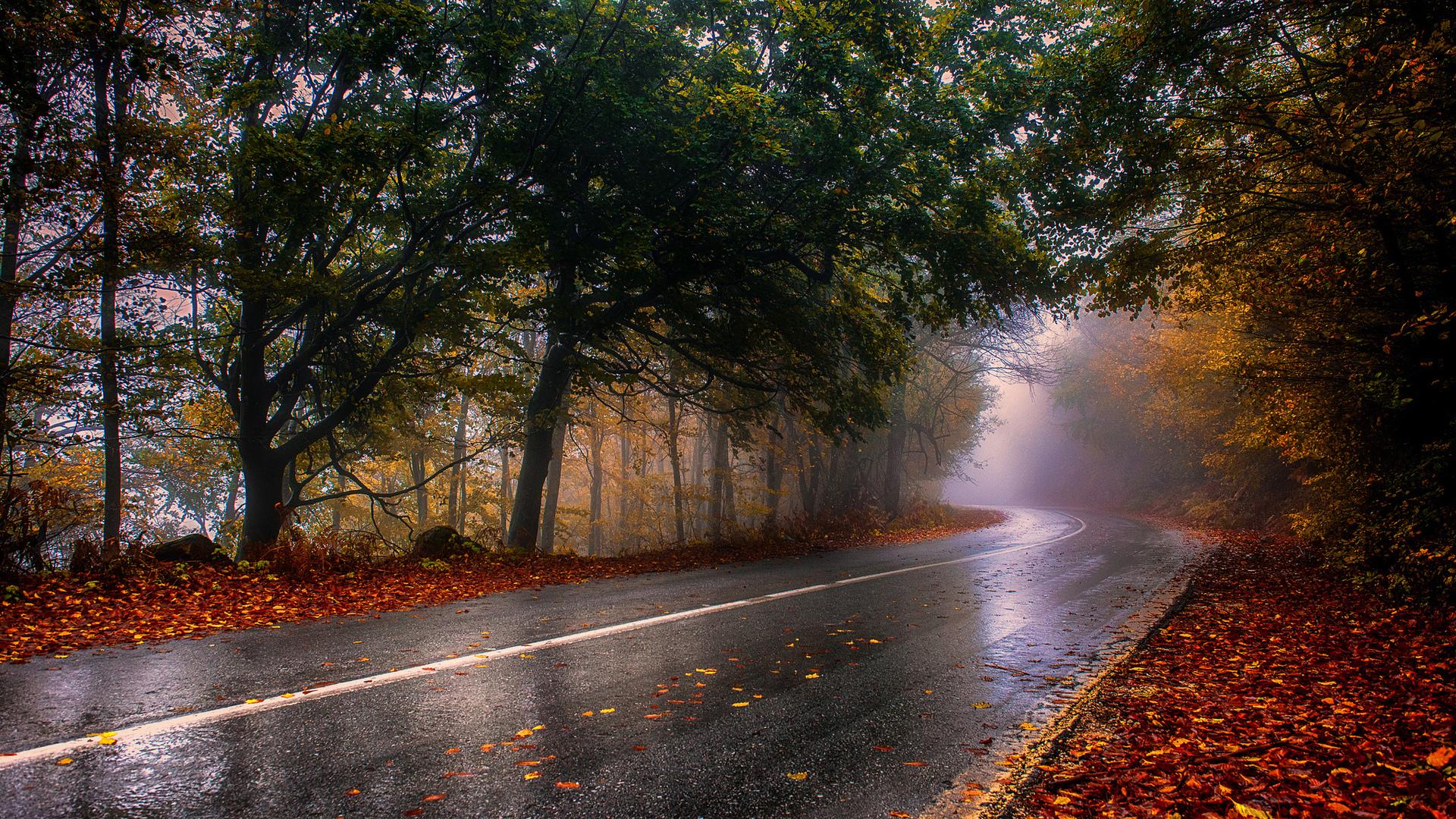 Осень фото красивые природа дождь