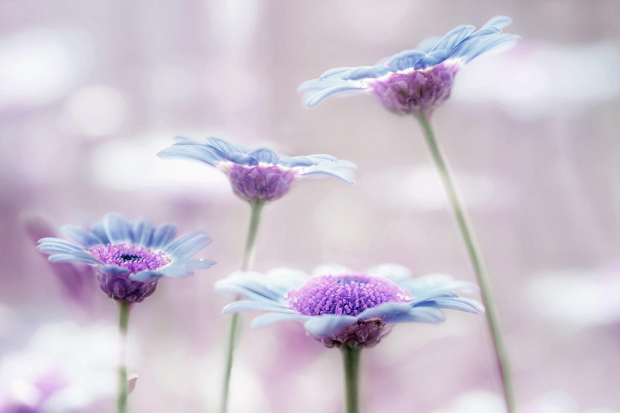 нежно-голубые цветочки бесплатно