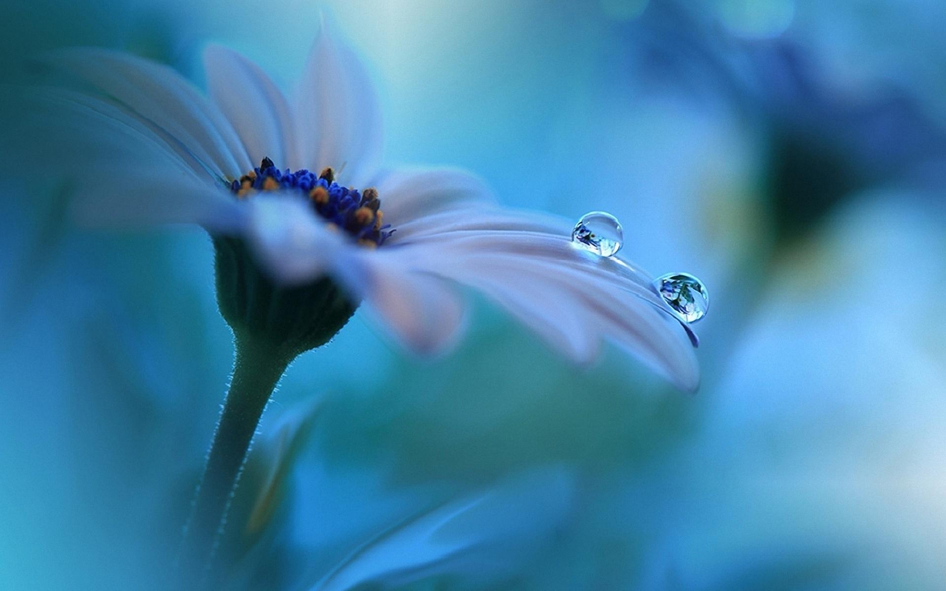 капля макро цветок  № 2540864  скачать