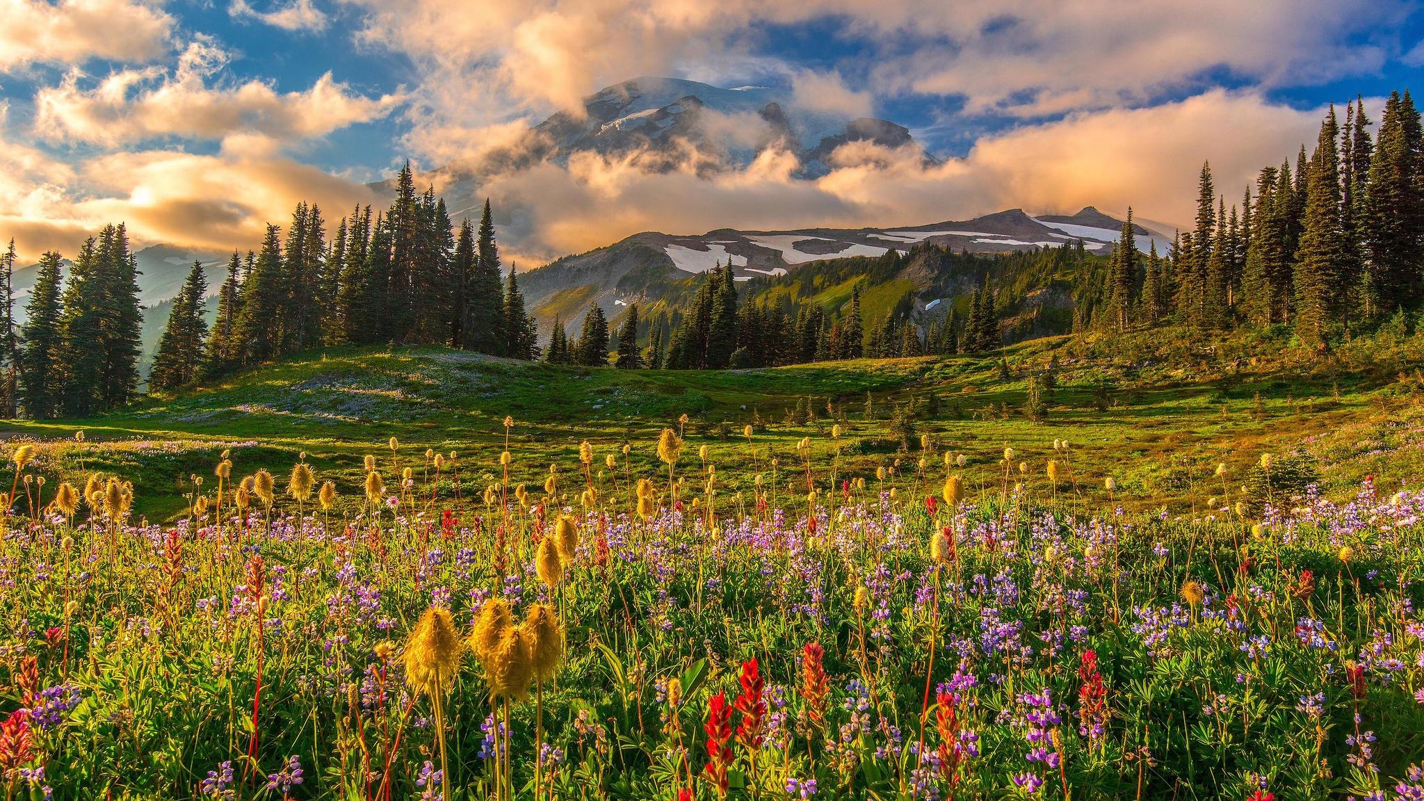 картинки лето цветы горы поняла это