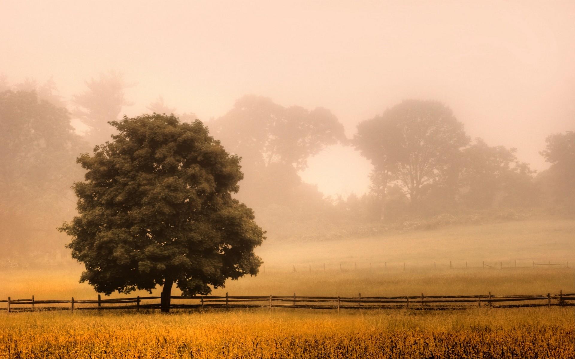 поле туман вечер скачать