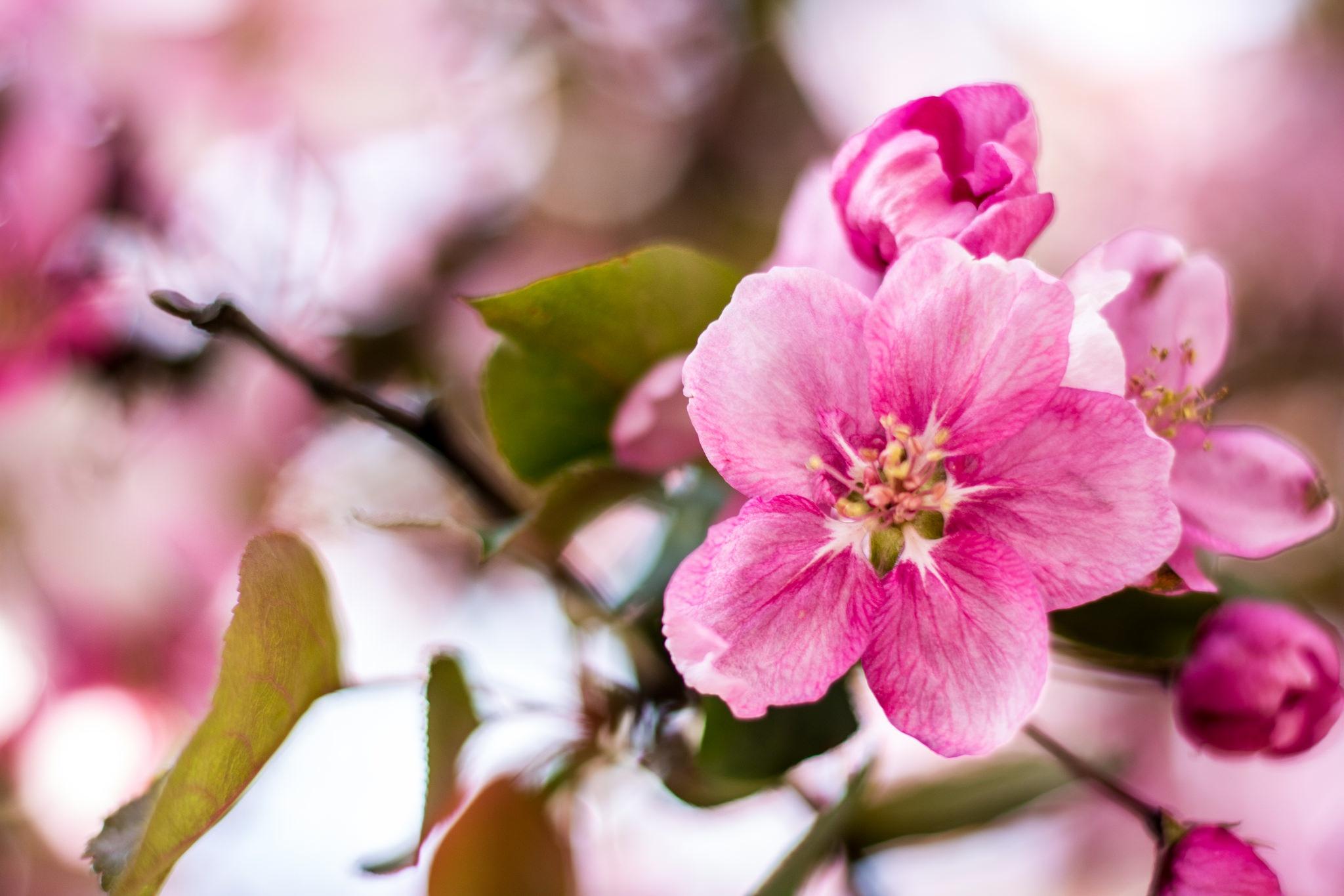Распустивныйся цветок  № 2992657 бесплатно