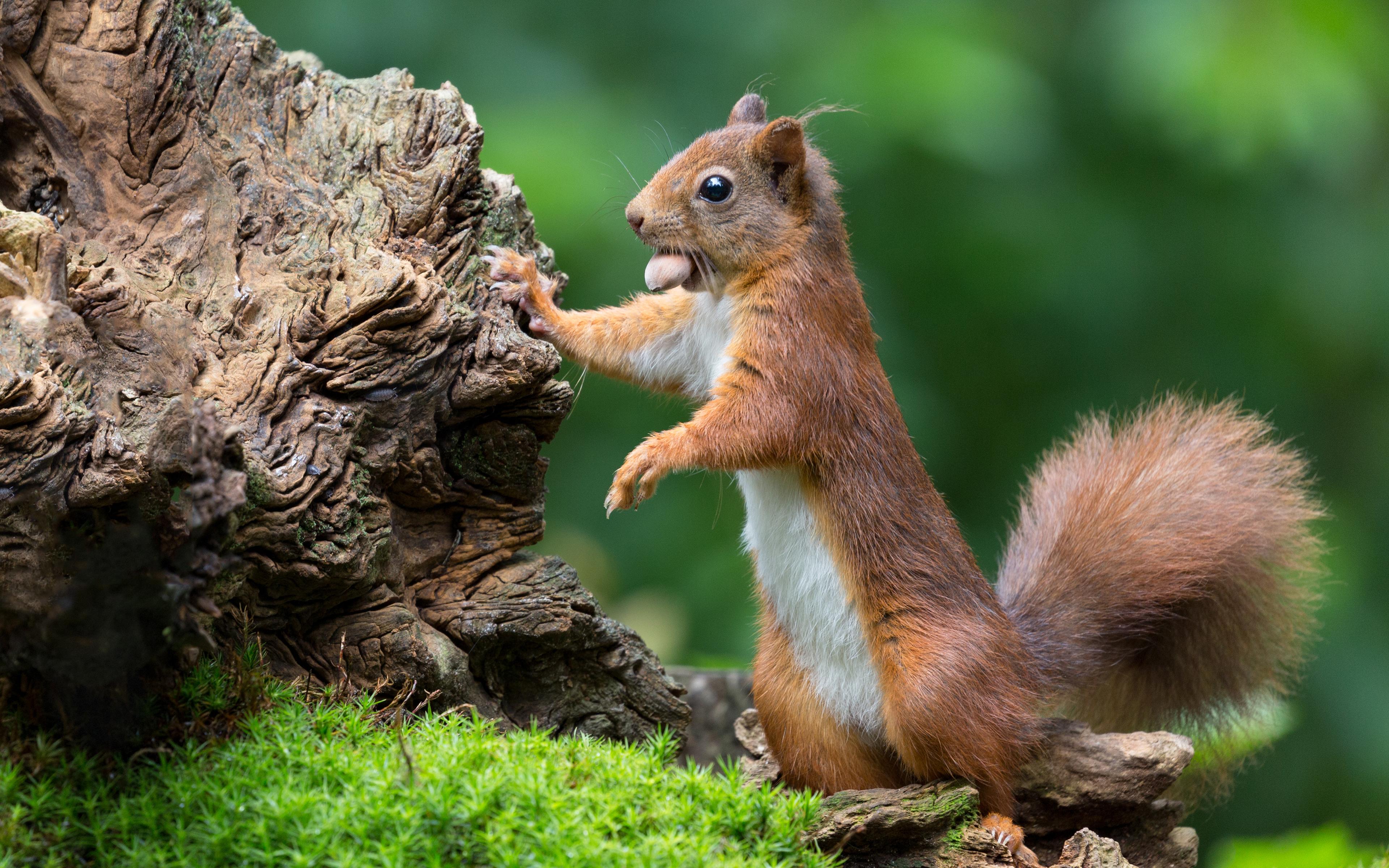 Картинки природы с животными красивые и смешные