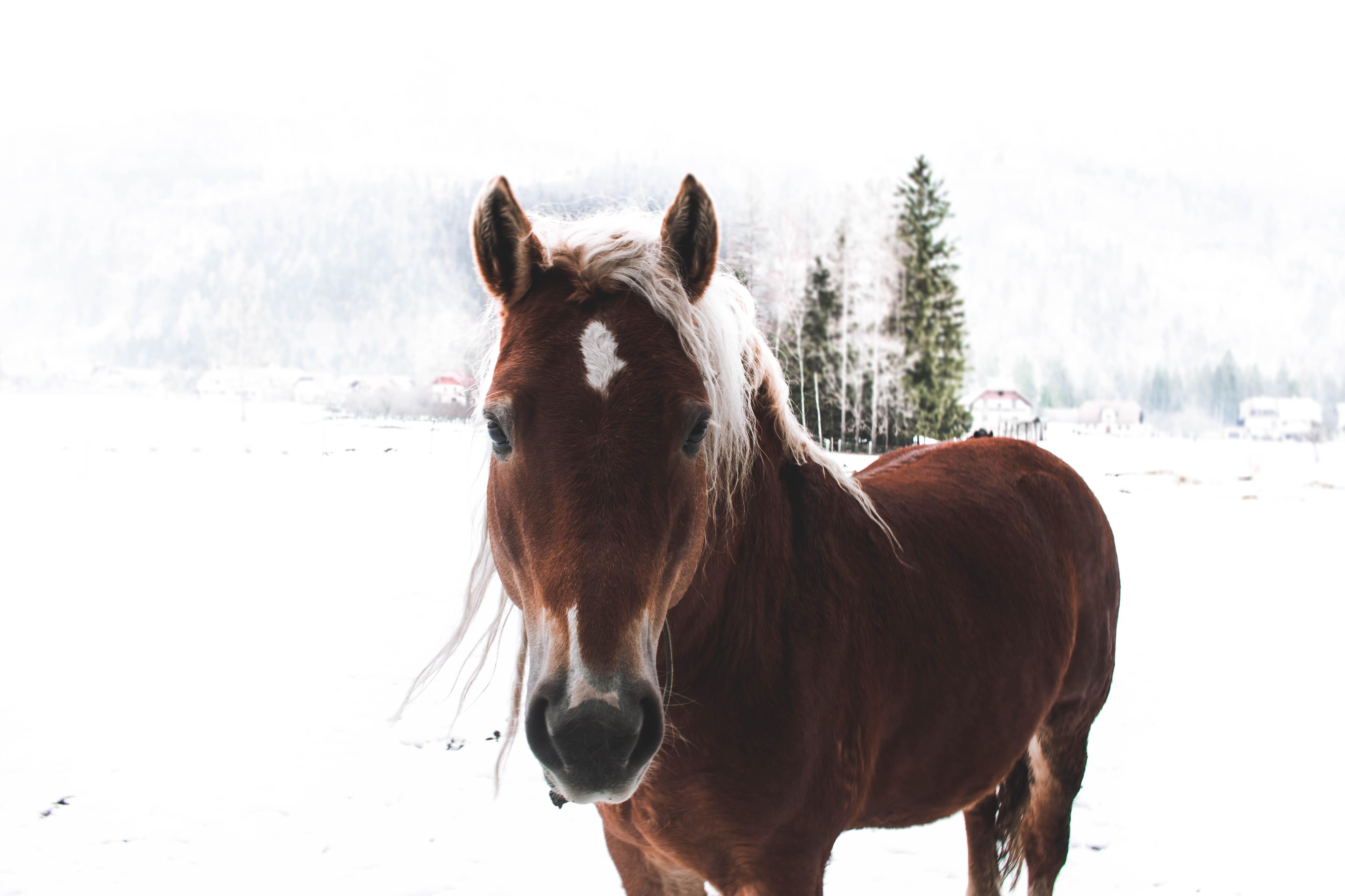 Открытка лошади зимой, фотки девушек без
