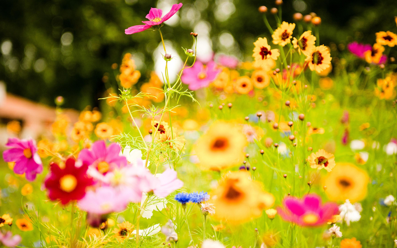 Картинка с летними цветами, спасибо тебе родная