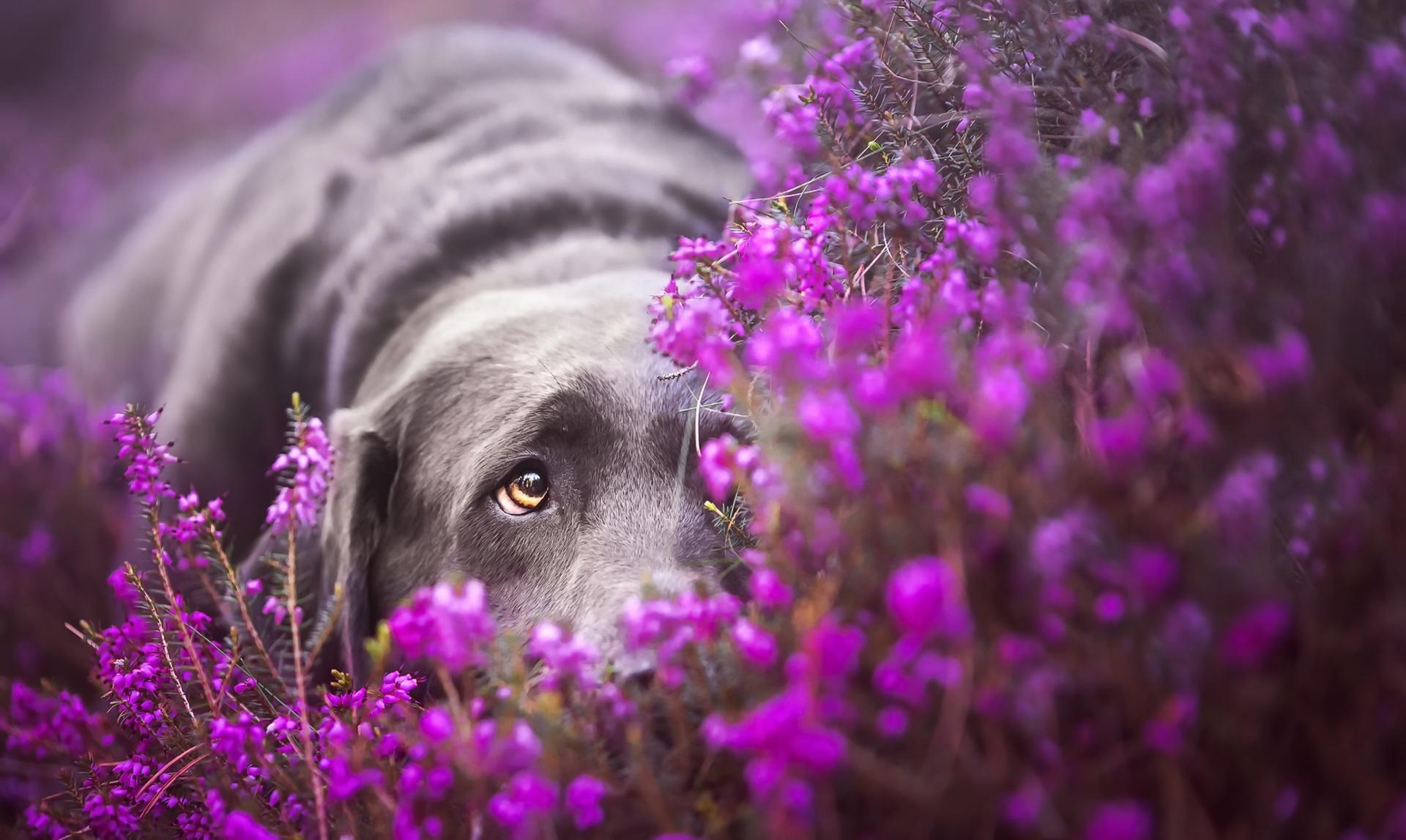 фиолетовые животные фото того