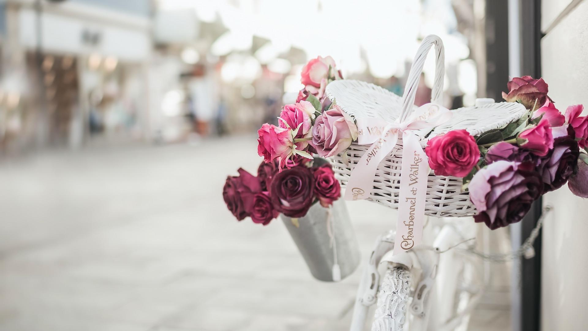 входит основу обои на рабочий стол велосипед и цветы белый, бежевый