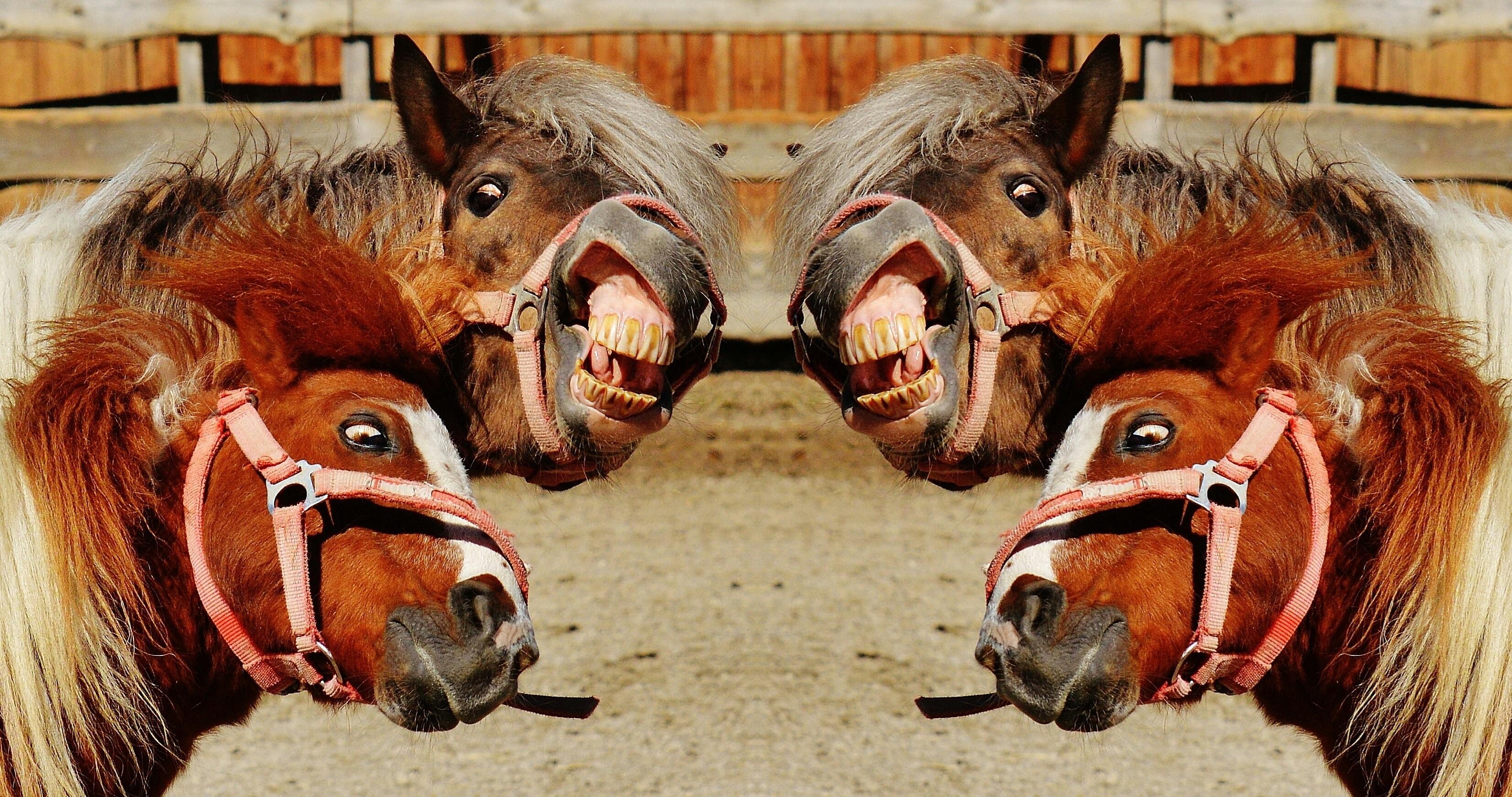 Картинки приколы про коней