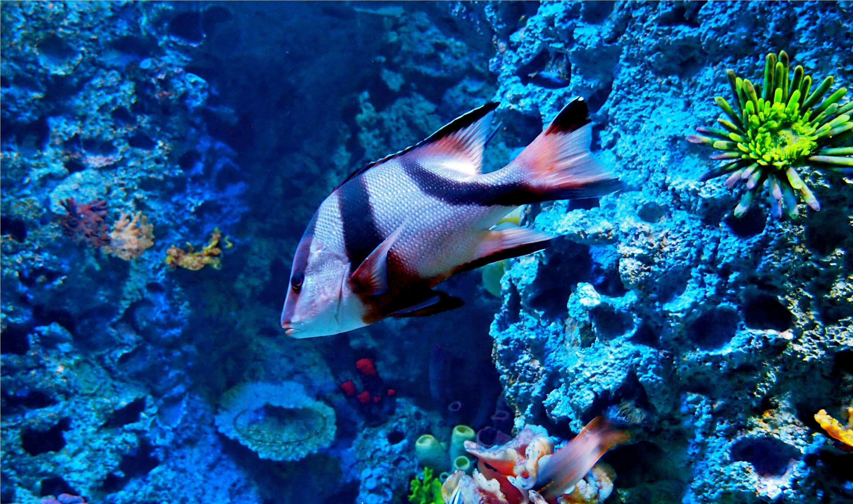 поверь меня рыбы атлантического океана фото импульсивные