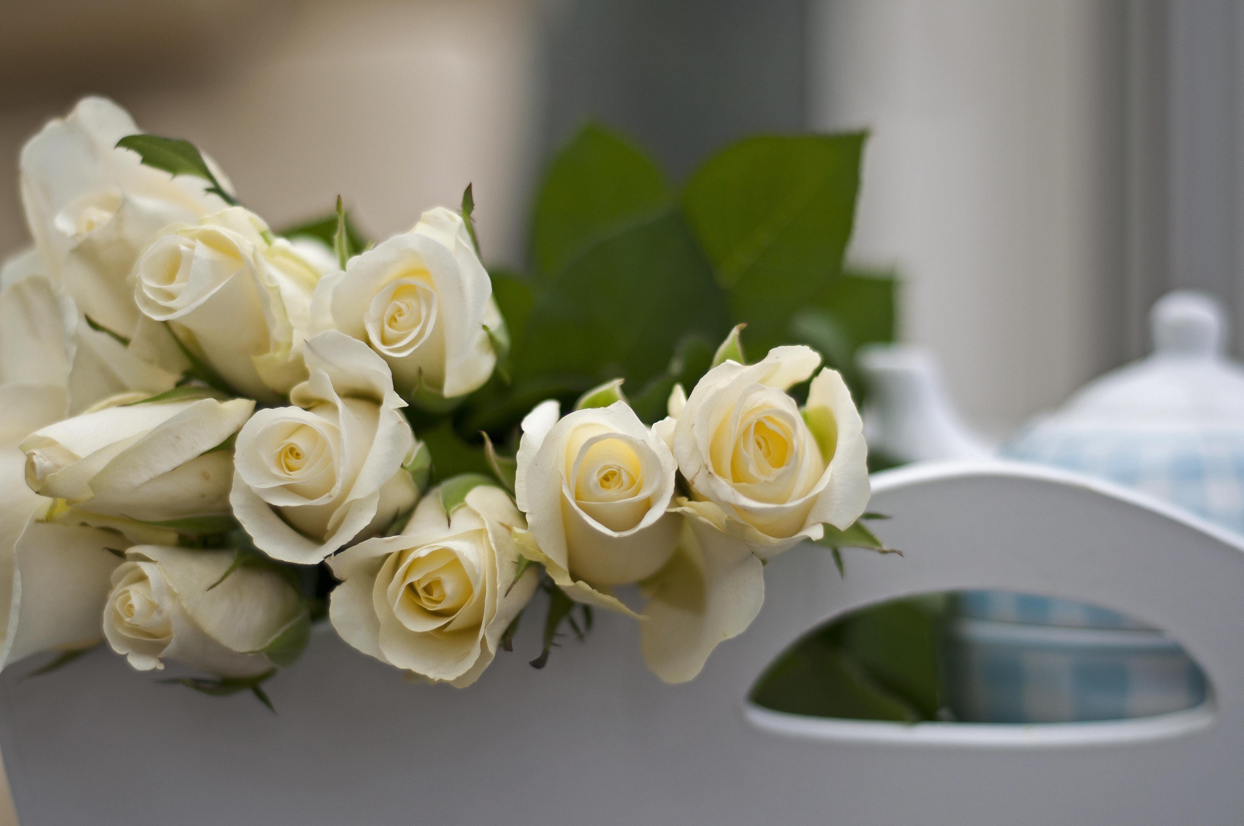 Днем, красивые цветы картинки розы белые