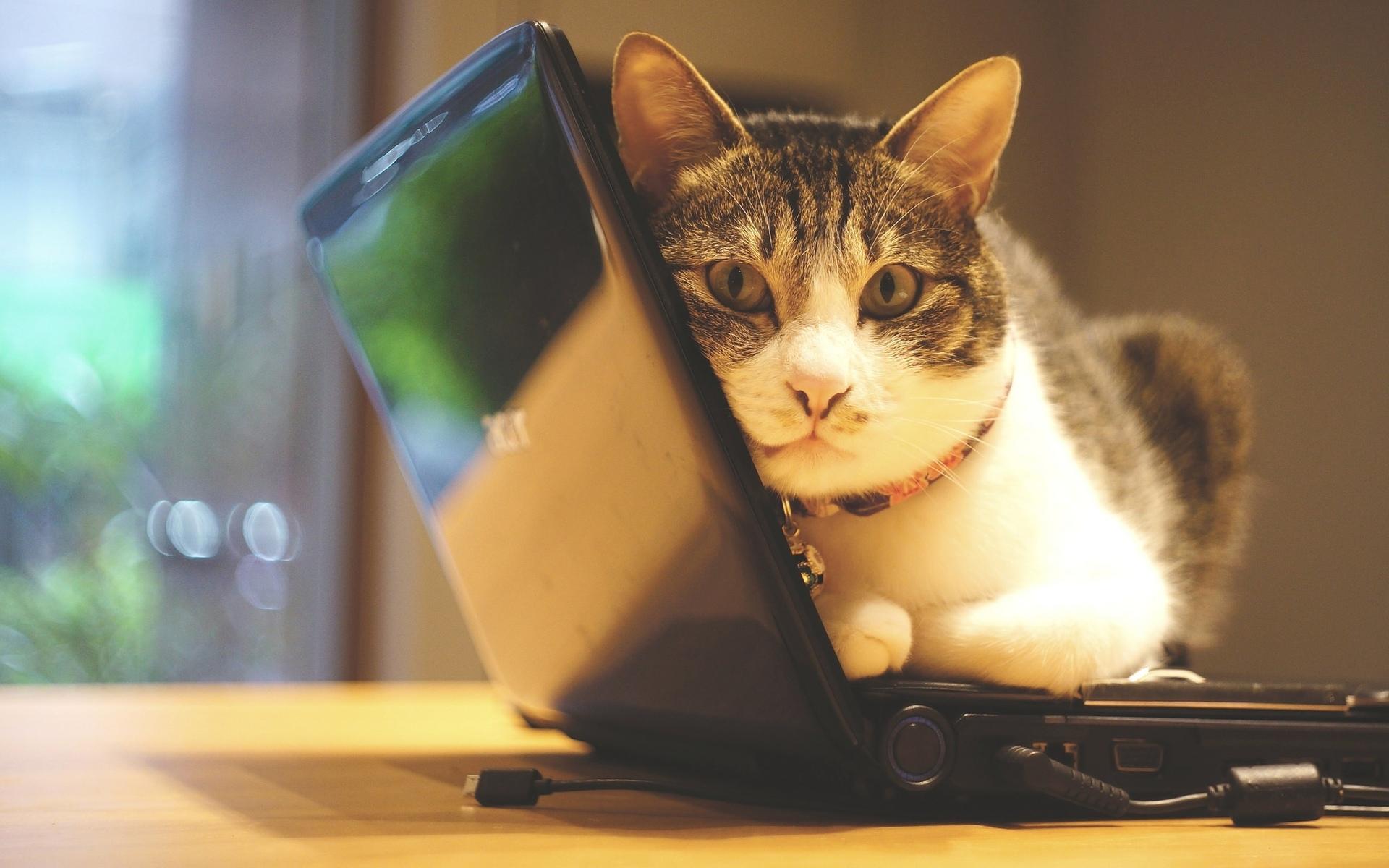 Коты в телефоне