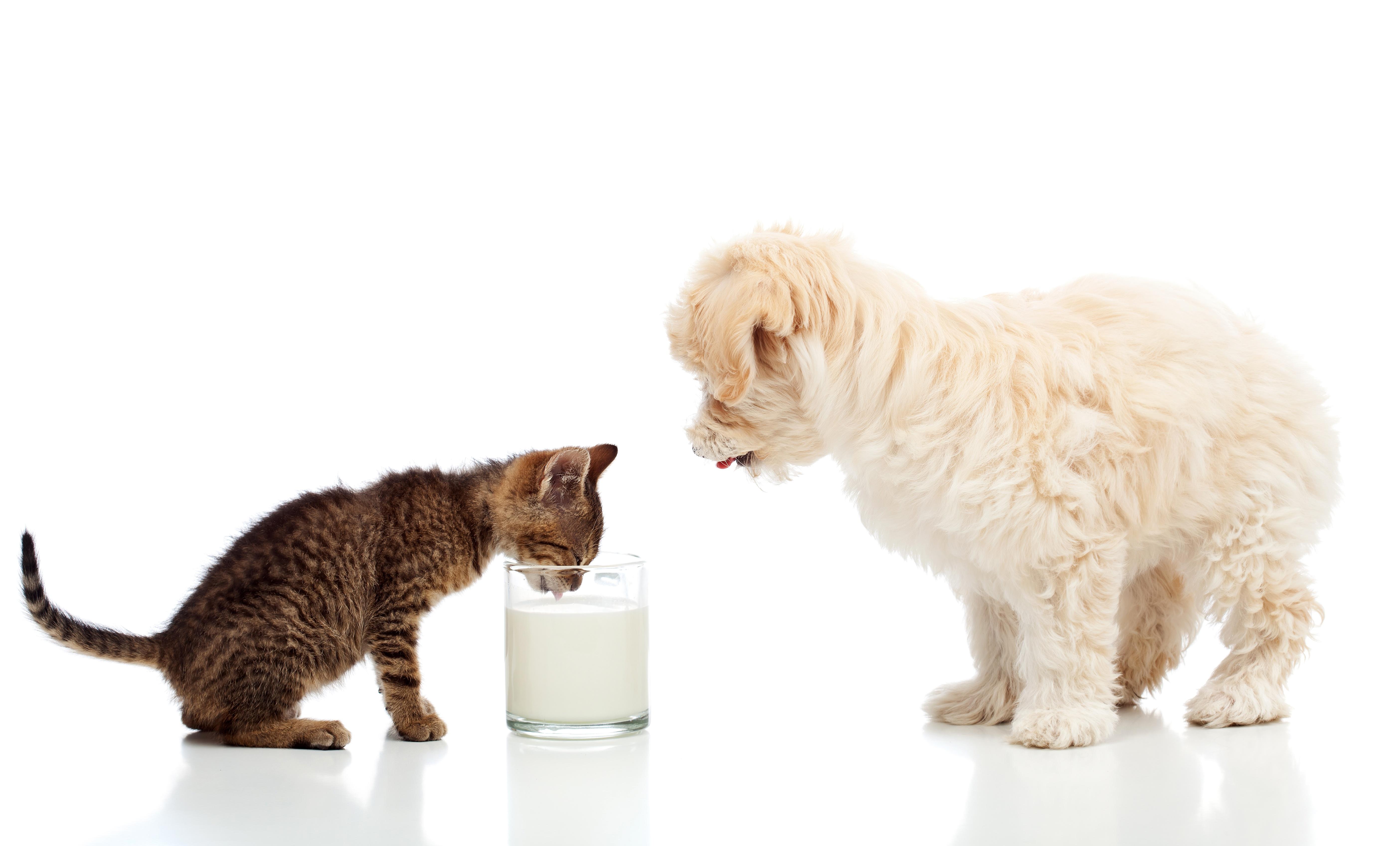 Картинка кота с белой собакой