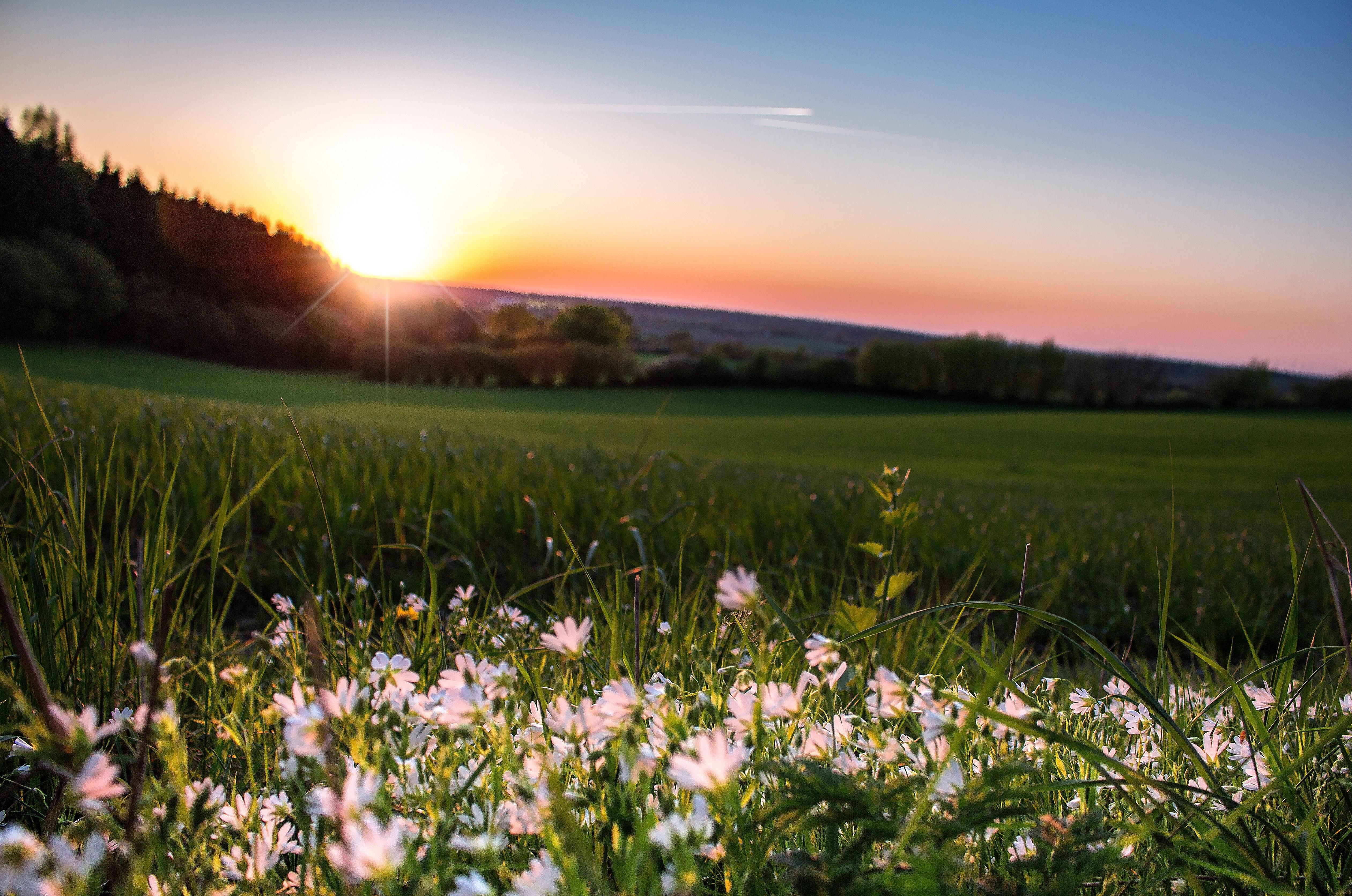 Открытки, картинки поле цветы солнце